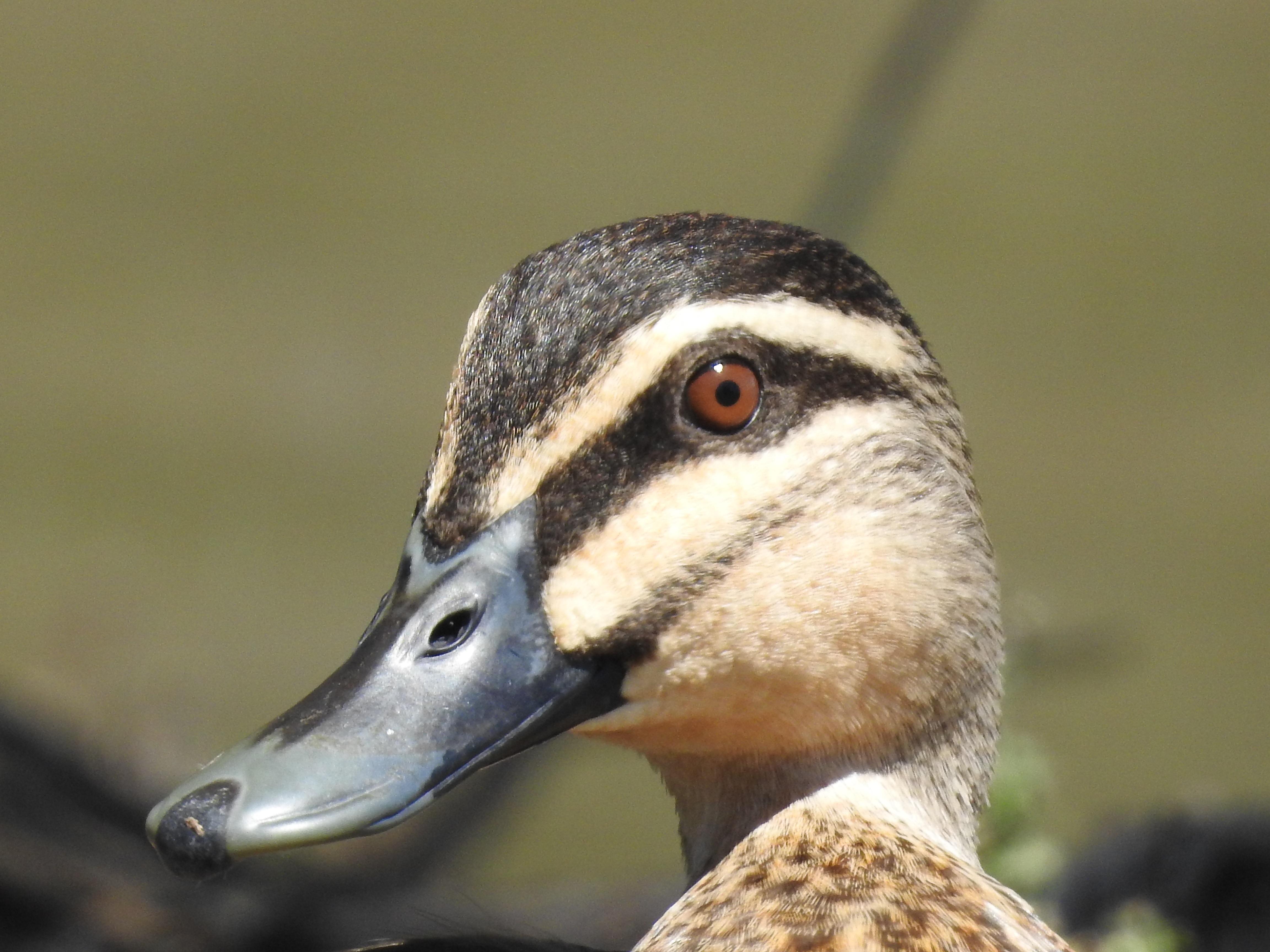 Images gratuites eau la nature la photographie lac - Images d animaux sauvages gratuites ...