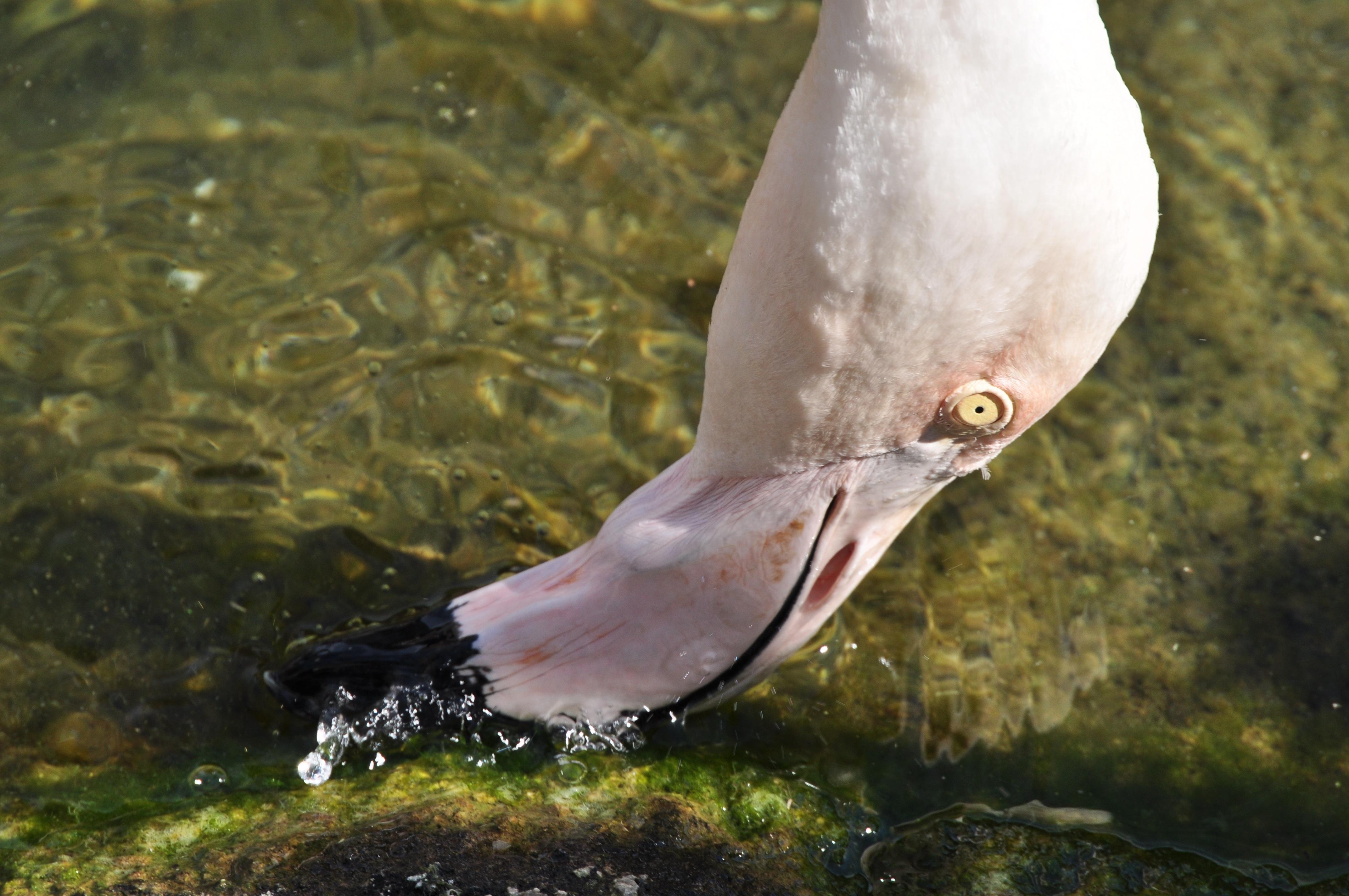 все рыба с клювом картинки подобрать оттенок поярче