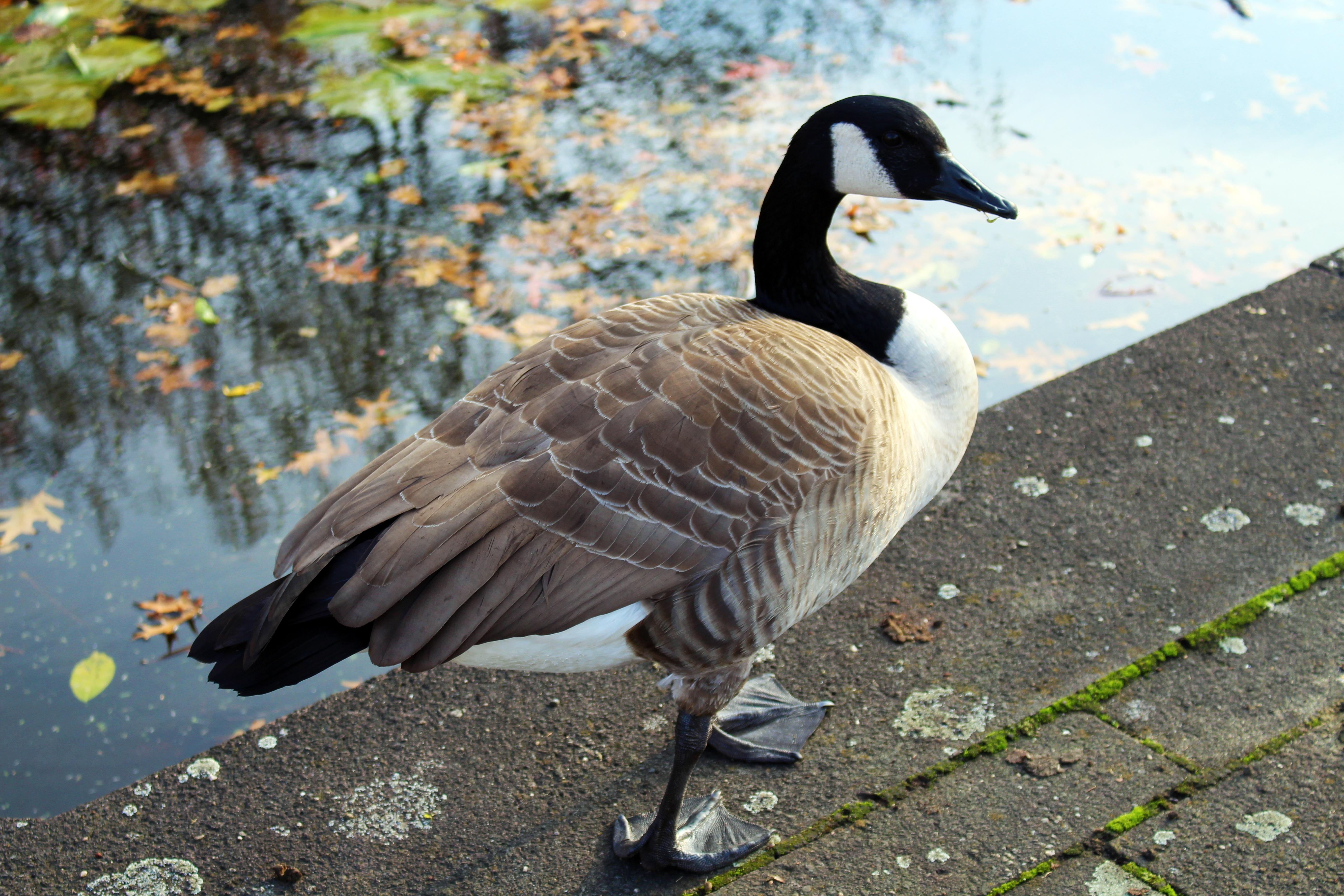 Poze Natură Pasăre Aripă Lac Animale Sălbatice
