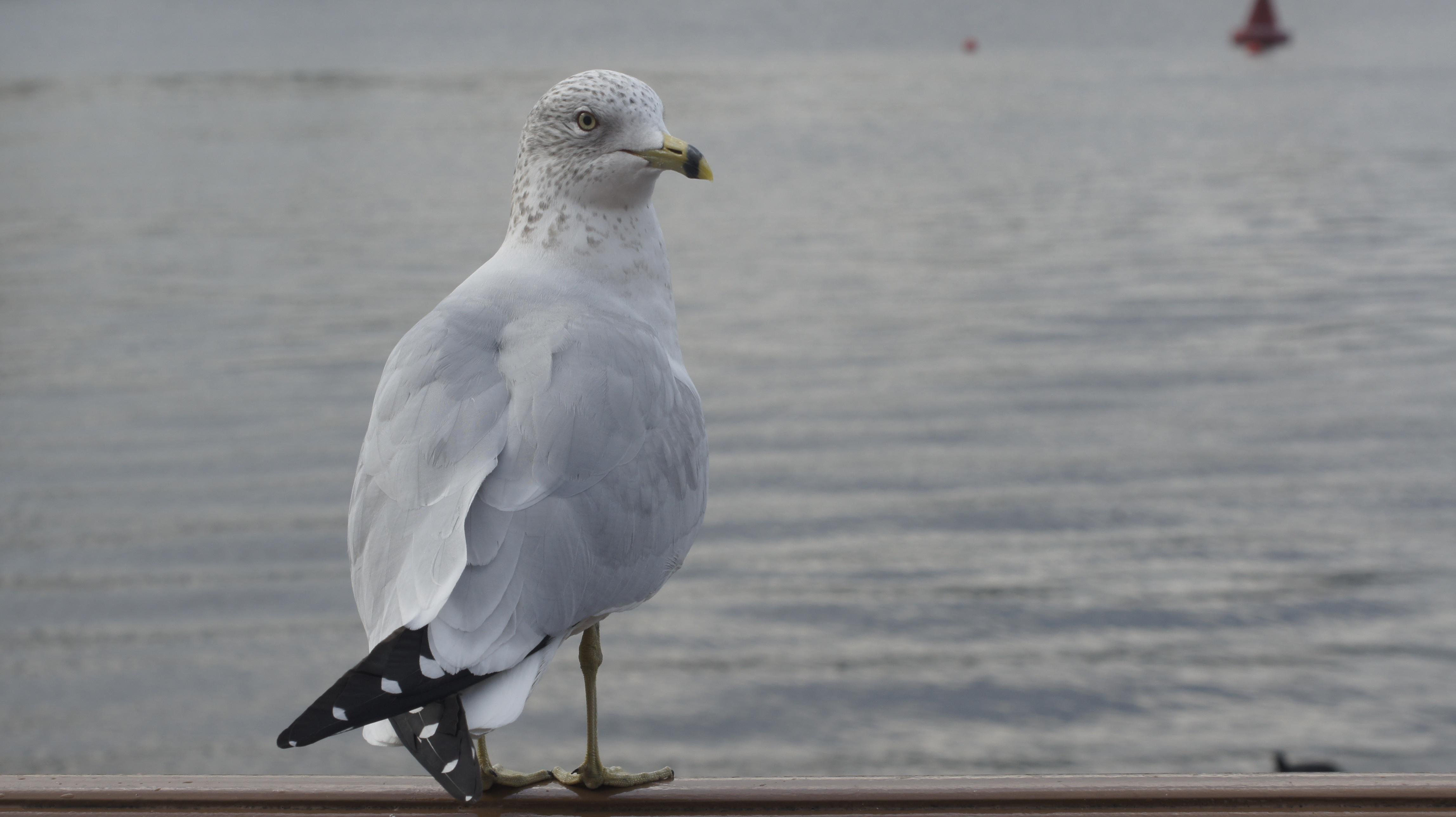 картинки чайка и новый год никогда жаловался плохое