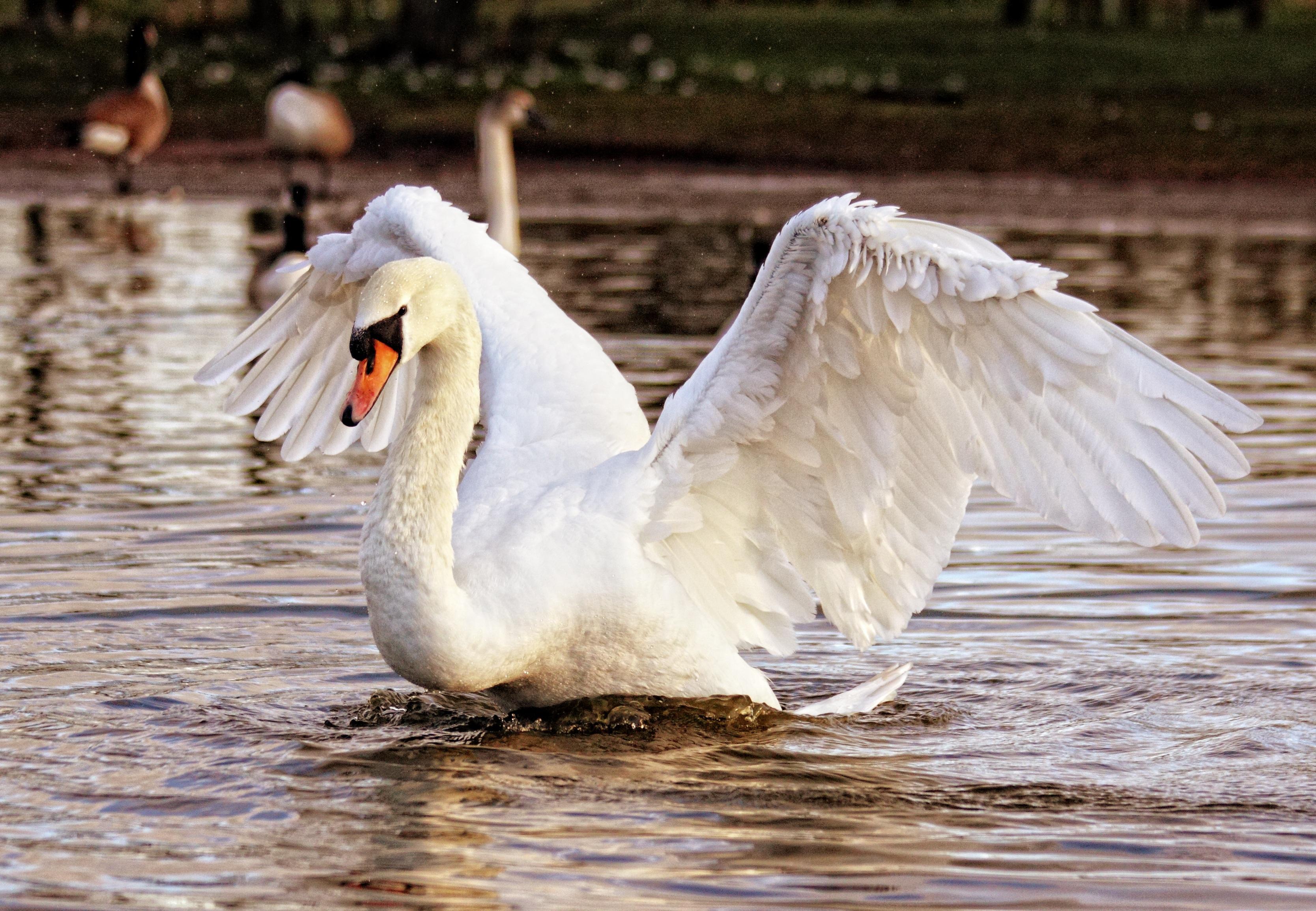 λευκό πουλί εικόνες