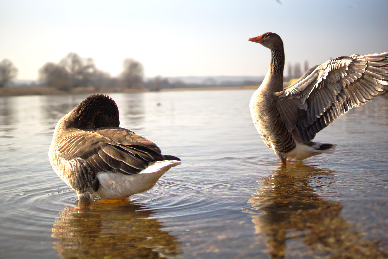 инструменты улыбка фото водоплавающих птиц с названием поздравления первым днем