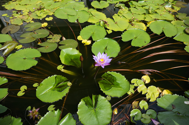 Free Images Nature Blossom Leaf Adventure Tourist Pond Green