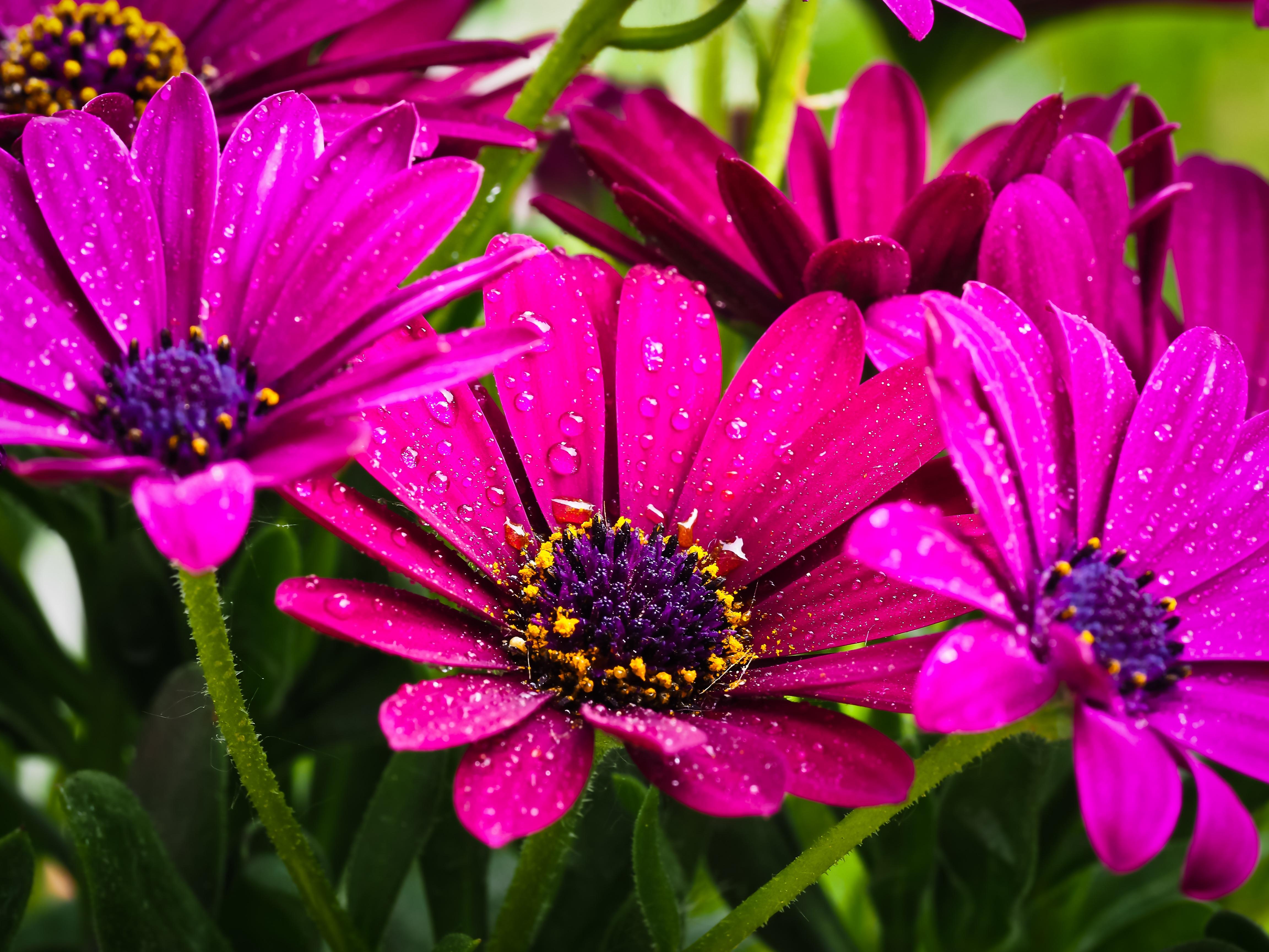 free images nature blossom petal bloom spring botany