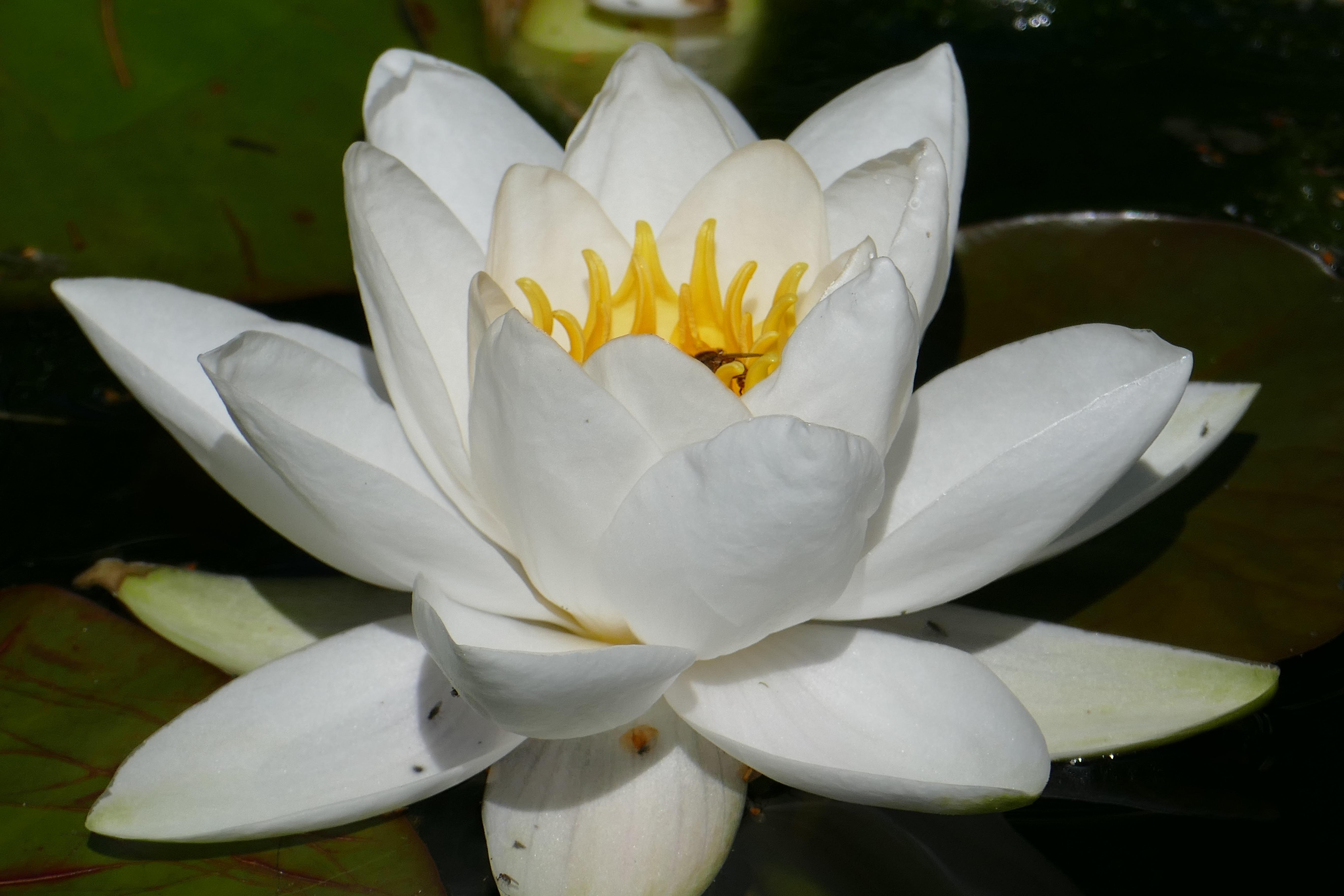 Free Images Nature Blossom White Flower Petal Bloom Botany
