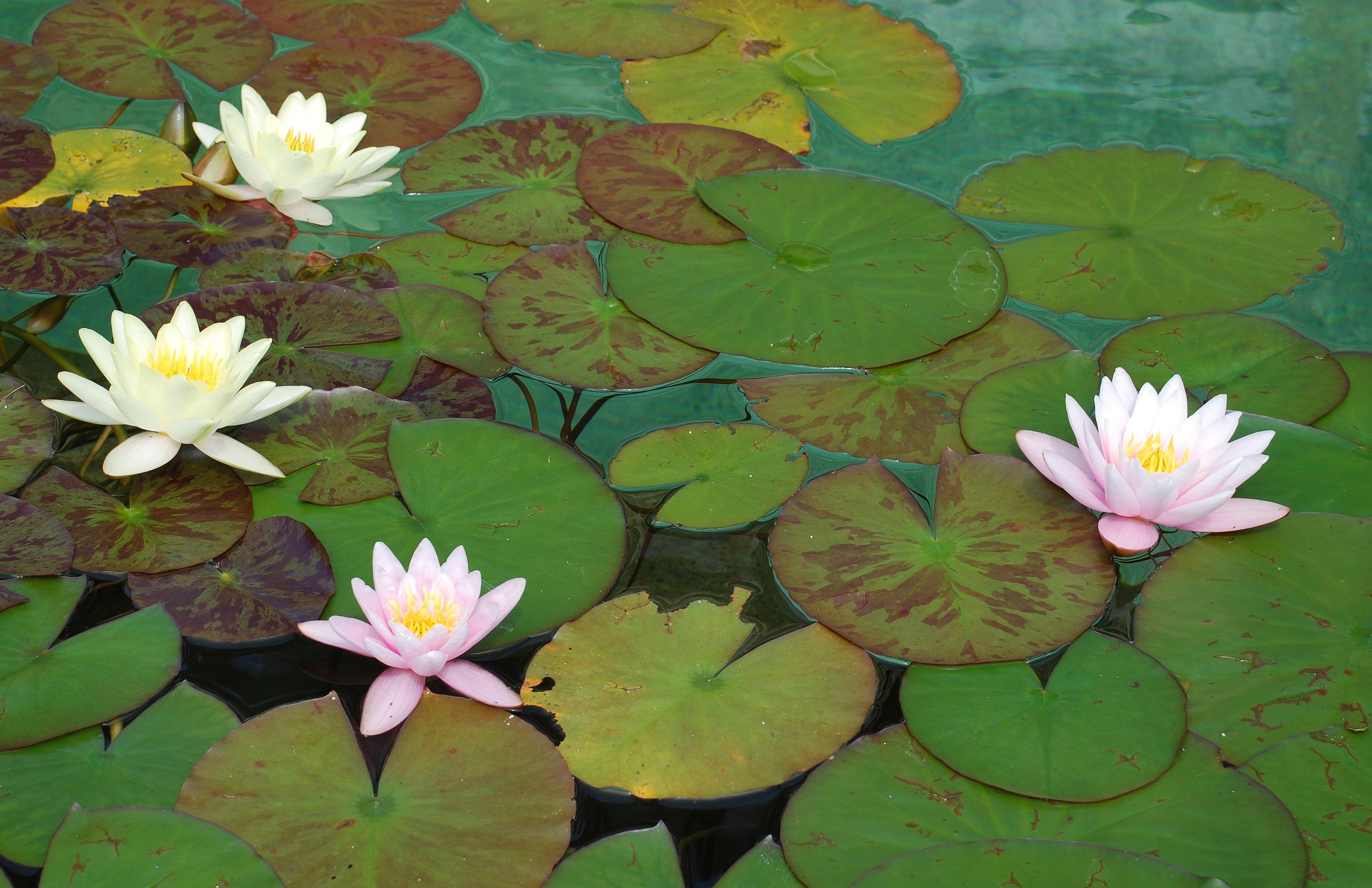 Free Images Nature Blossom White Leaf Flower Petal Bloom