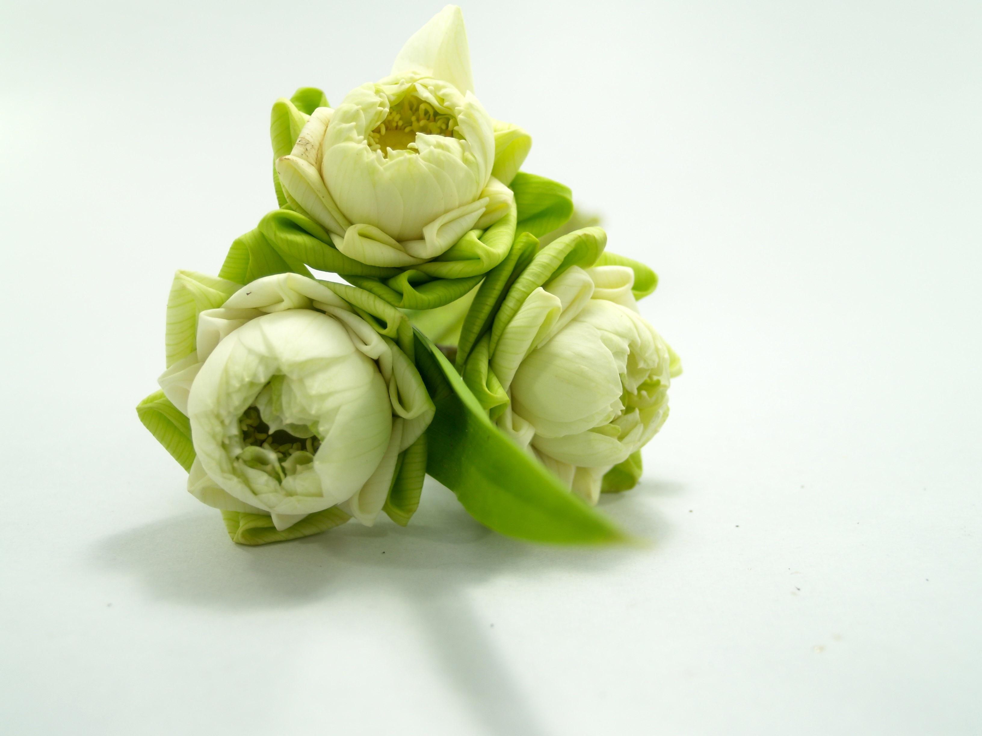 Asian cut flowers
