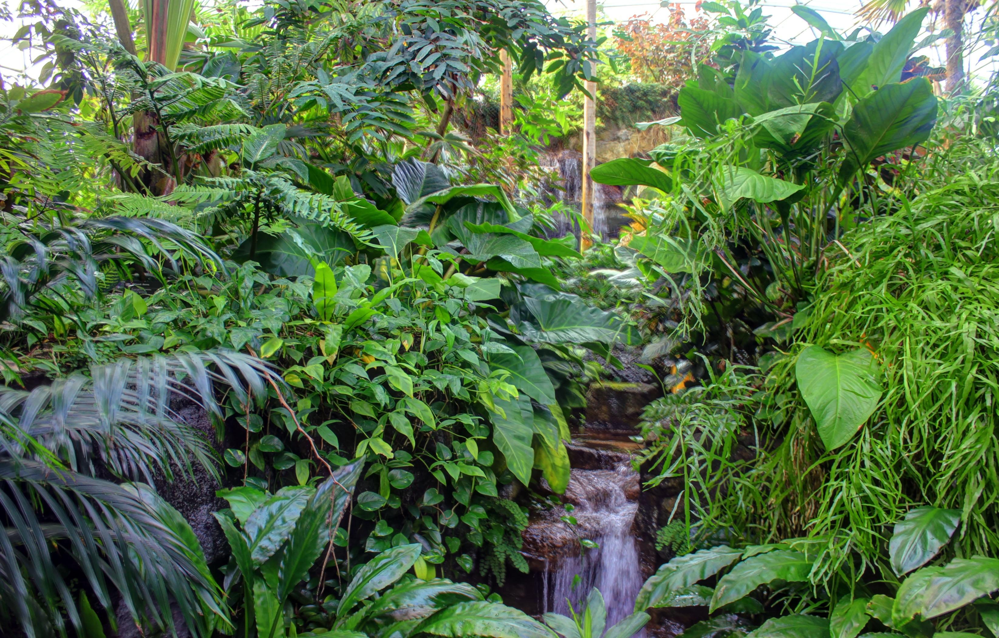 Free water nature flower stream green jungle