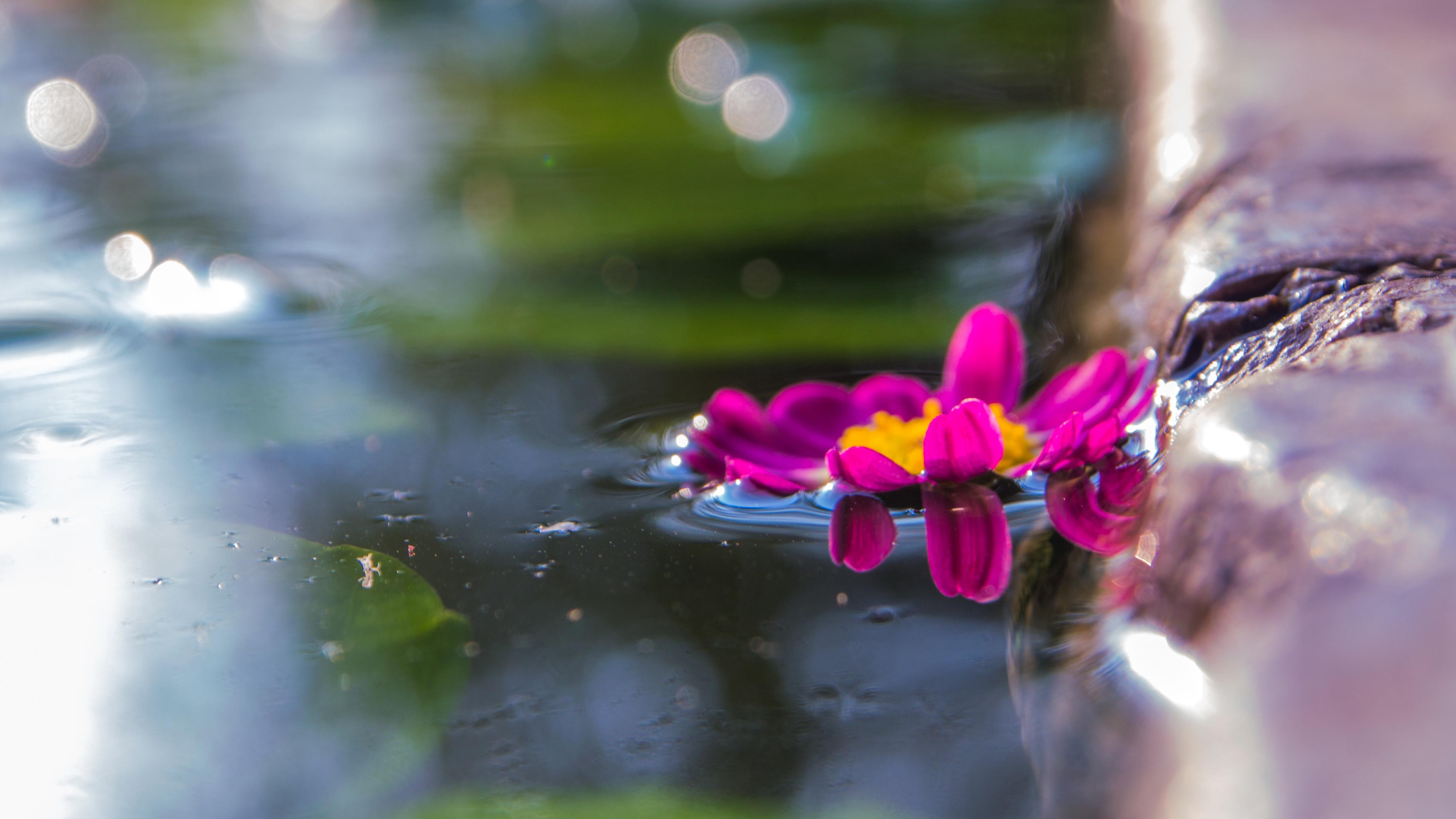 Kostenlose foto : Wasser, Natur, Gras, Ast, blühen, Pflanze ...