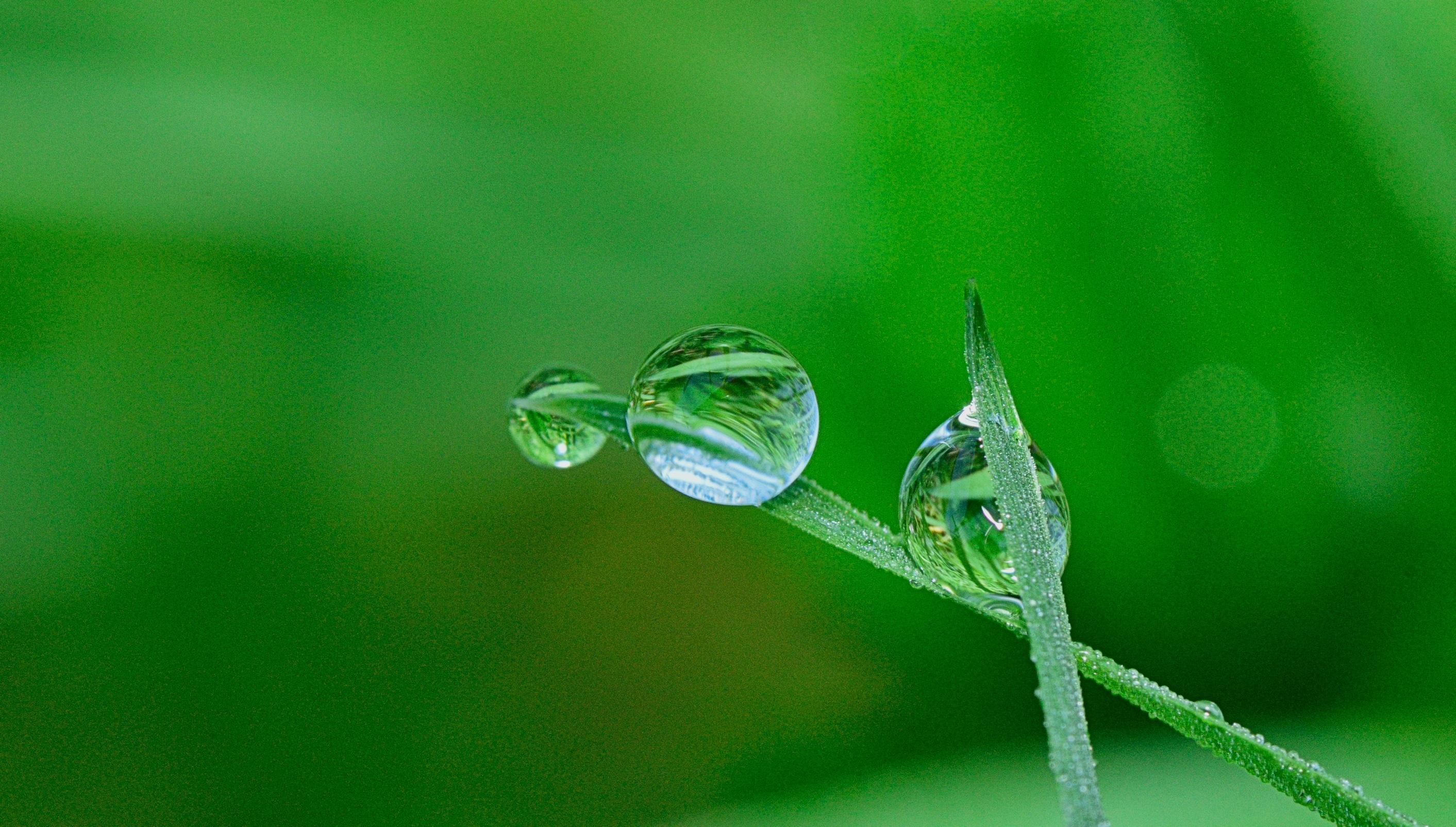 Free images nature grass branch drop dew lawn rain for Immagini natura gratis