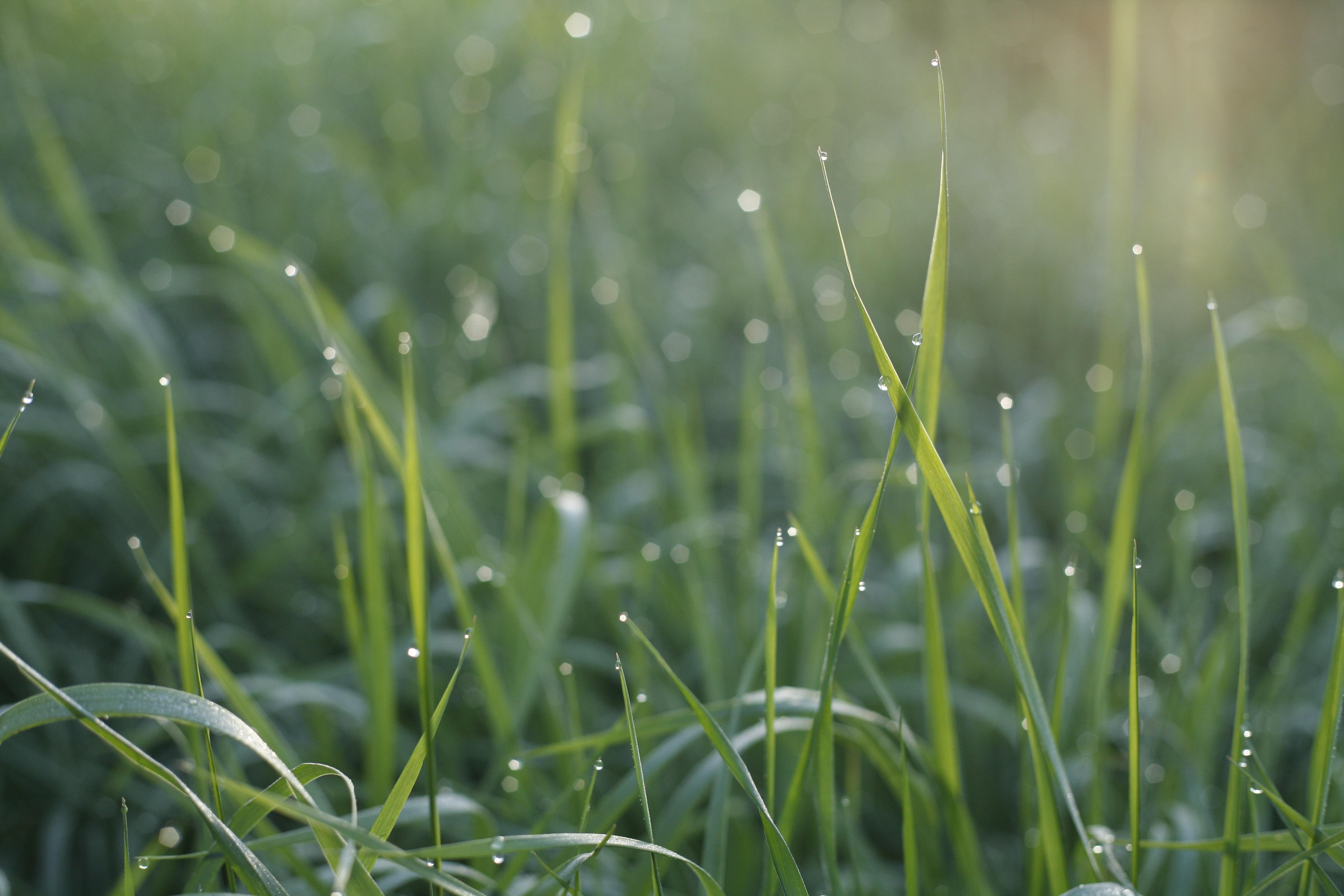 всех картинки трава с росинкой обзора фотостудий