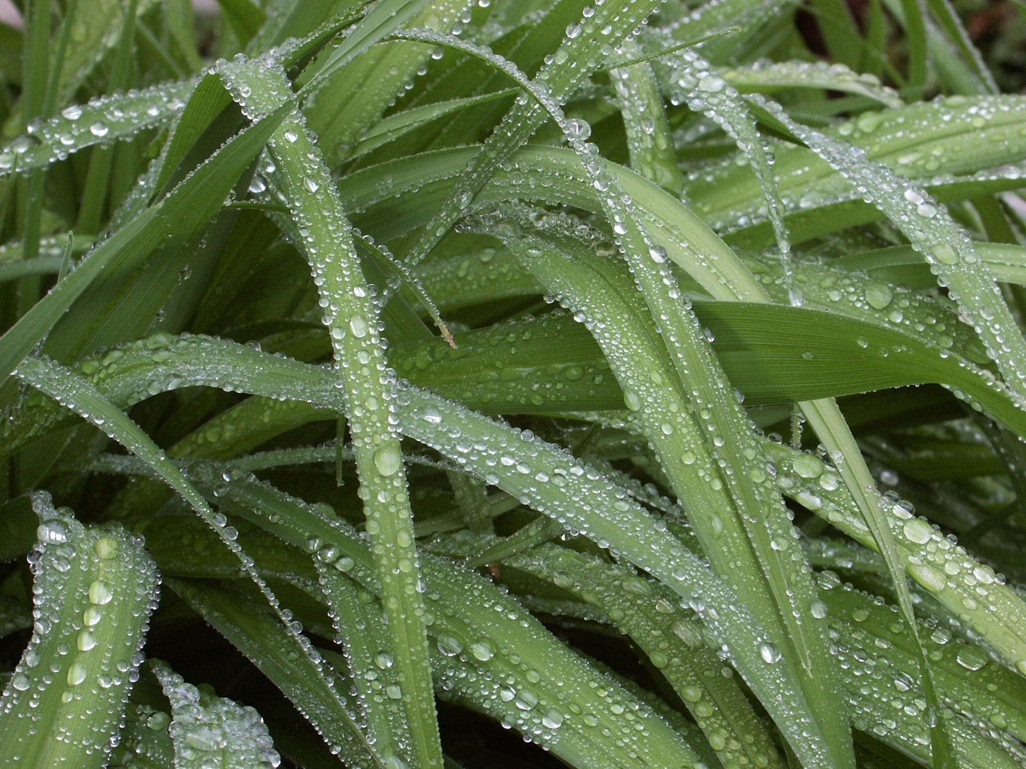 free images nature drop dew lawn morning rain leaf flower