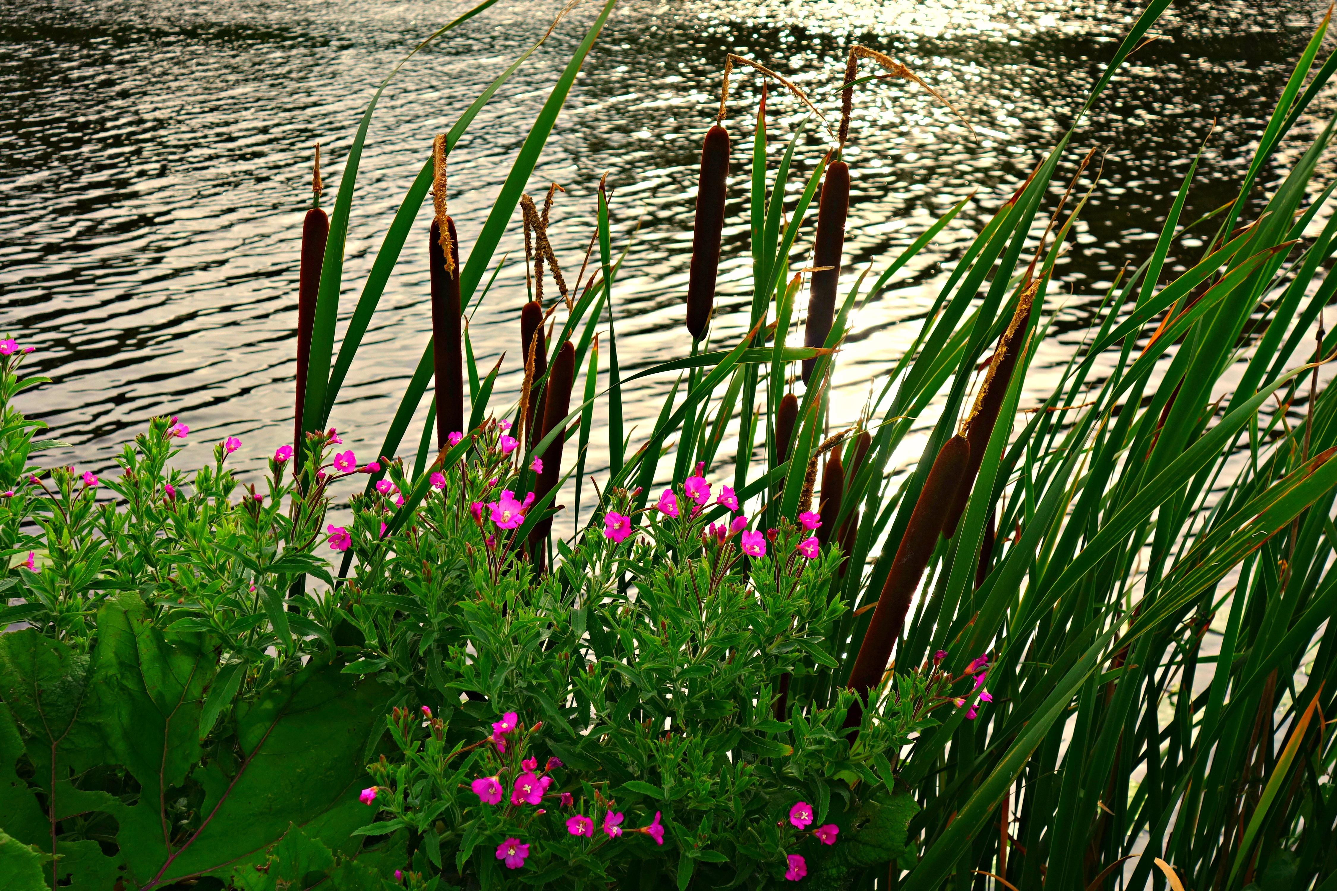 images gratuites eau la nature herbe plante champ. Black Bedroom Furniture Sets. Home Design Ideas