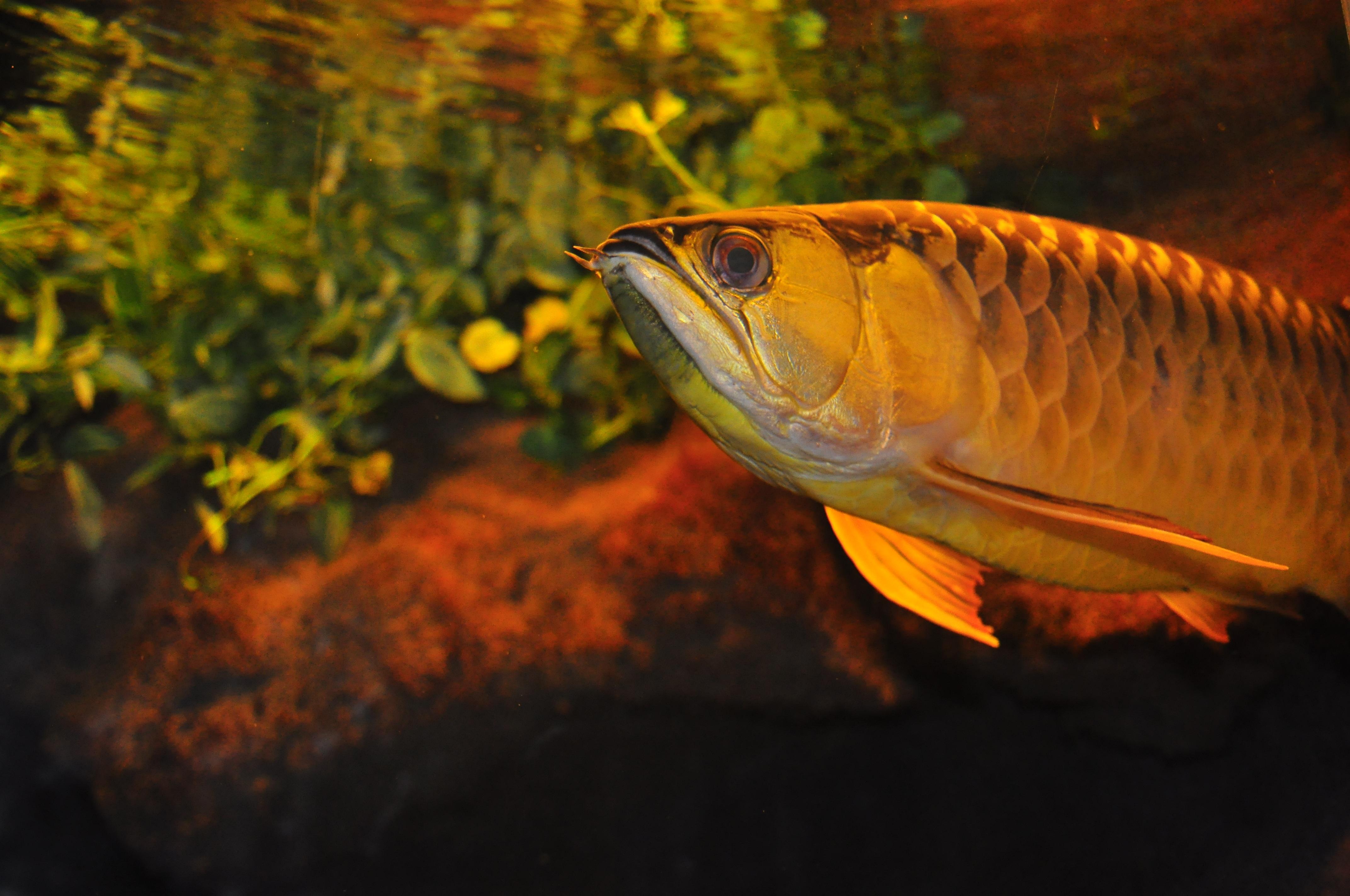Gambar Air Alam Daun Kaca Hewan Berenang Kebun Binatang