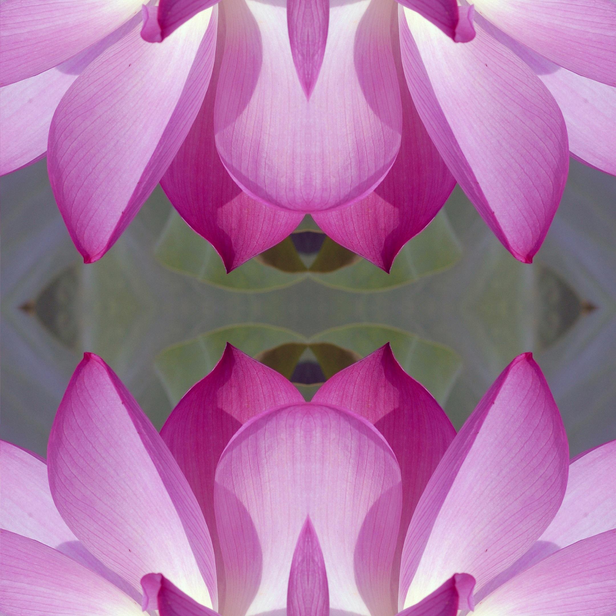 Gambar Alam Outdoor Mekar Abstrak Menanam Ungu Daun Bunga