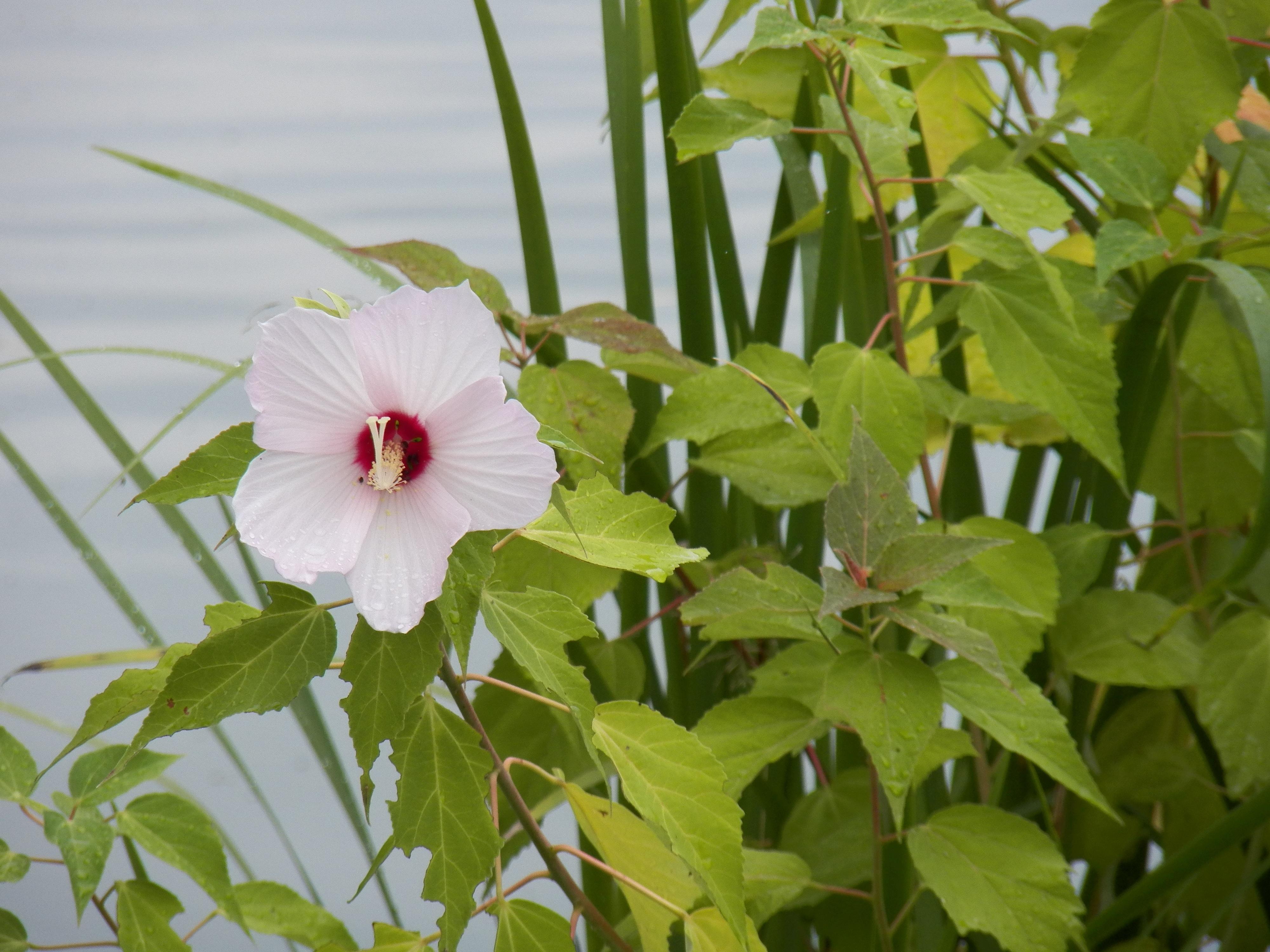 Images Gratuites Eau La Nature De Plein Air Fleur Lac Ete