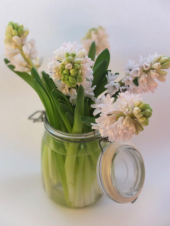 Free Images Water Nature Petal Jar Vase Spring Green Fresh