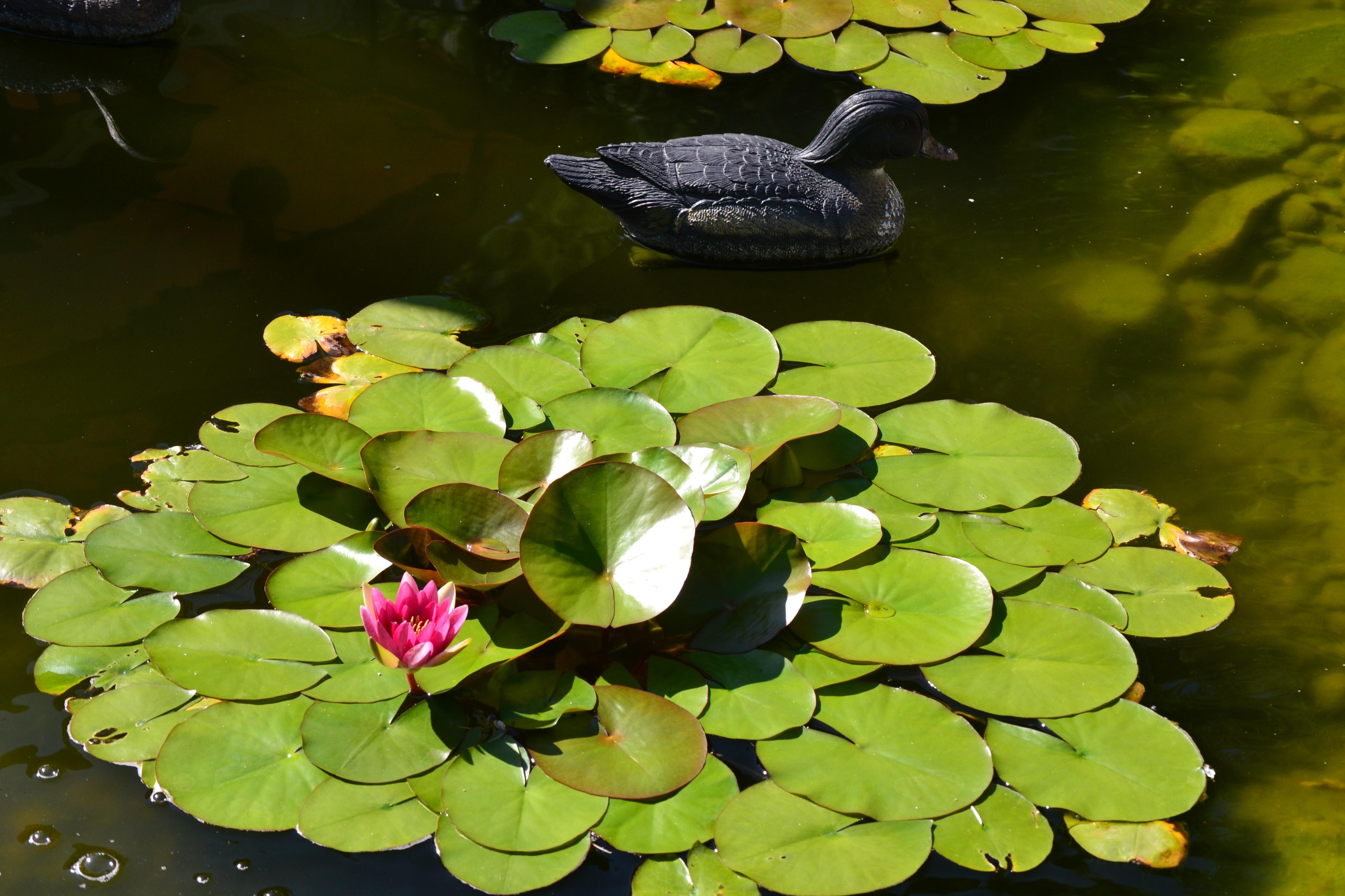 растения пресноводных водоемов фото совещании правительстве выглядит