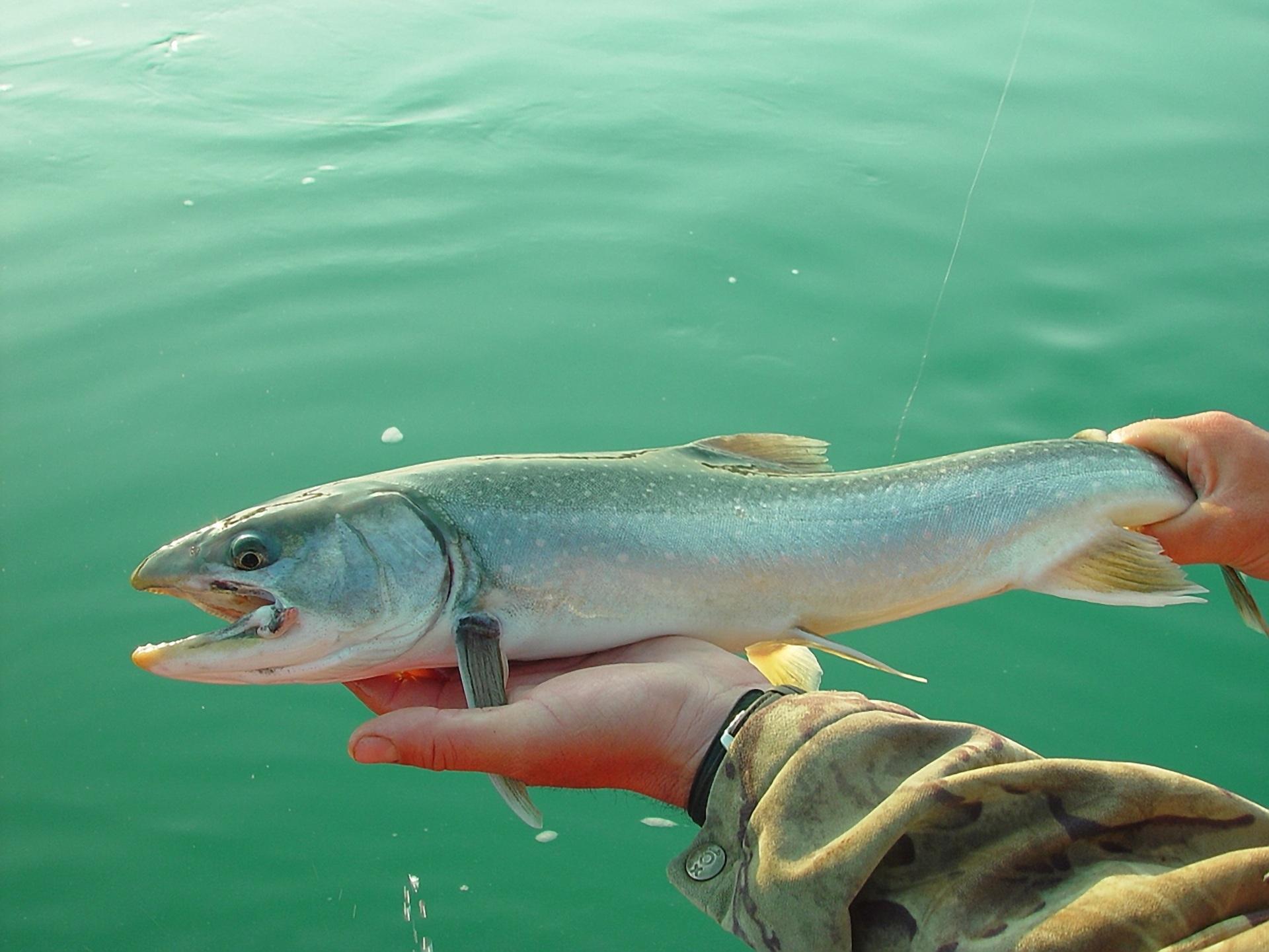 Free Images : water, nature, wildlife, wild, usa, seafood, fresh ...