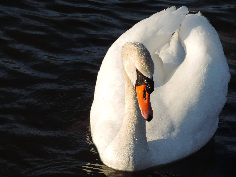 Visel biele vtáky