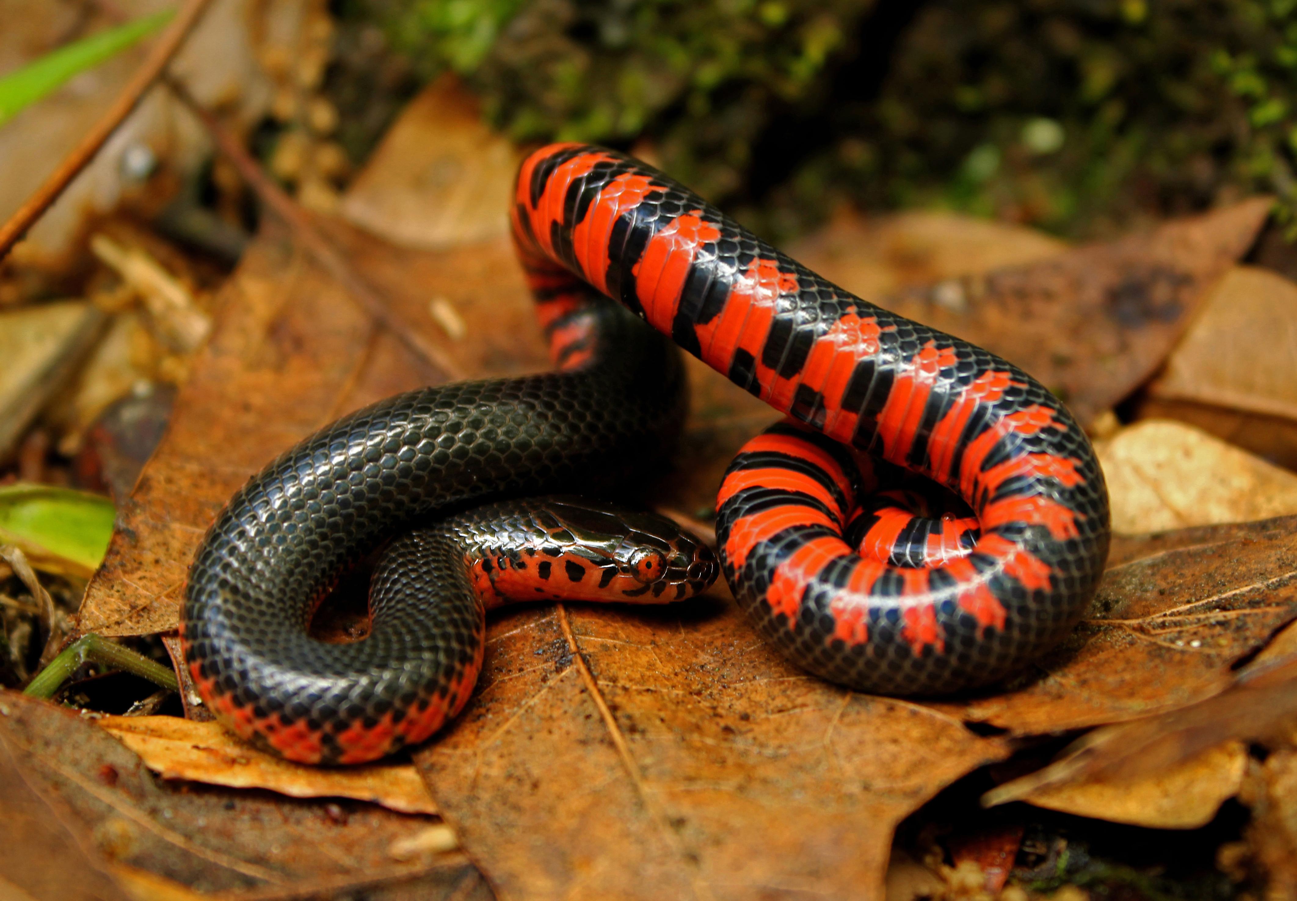 согласились фото картинки змей того