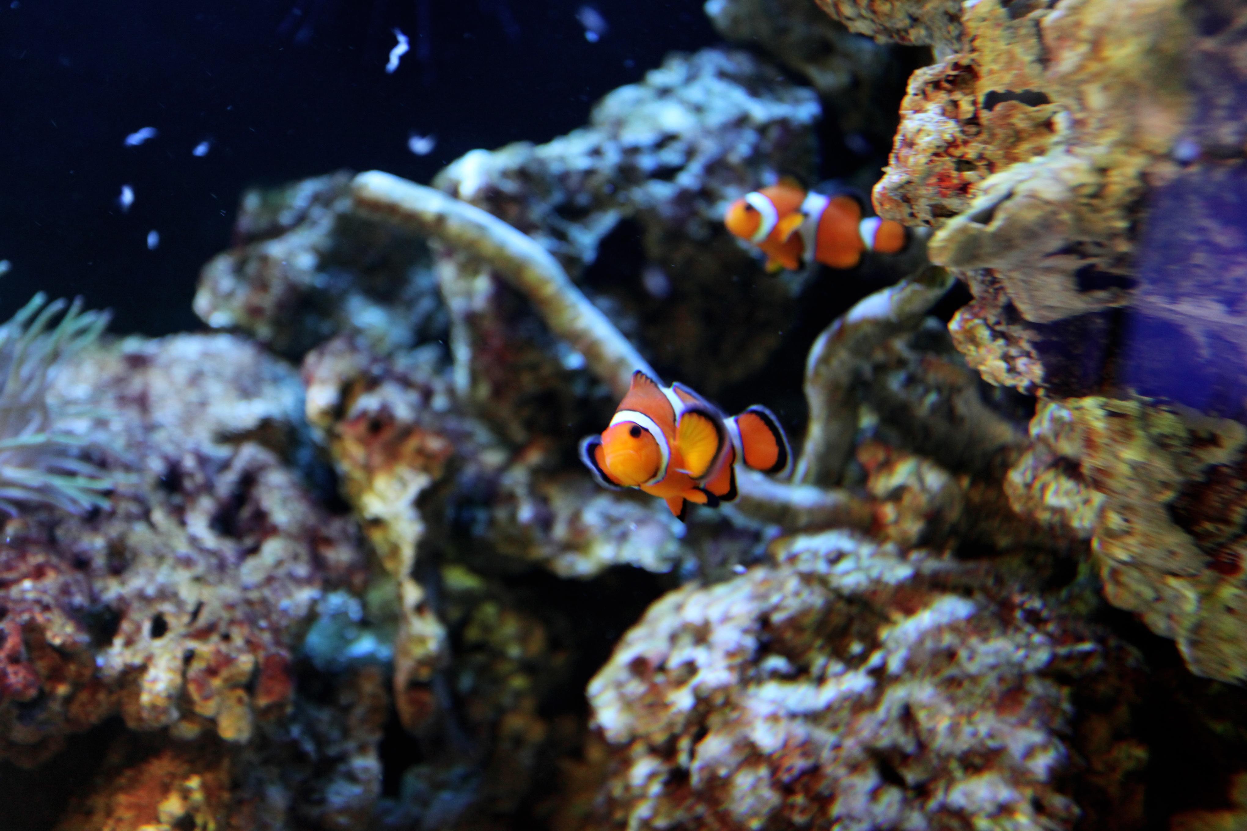 Free Images : water, nature, wildlife, underwater, fauna ... - photo#23