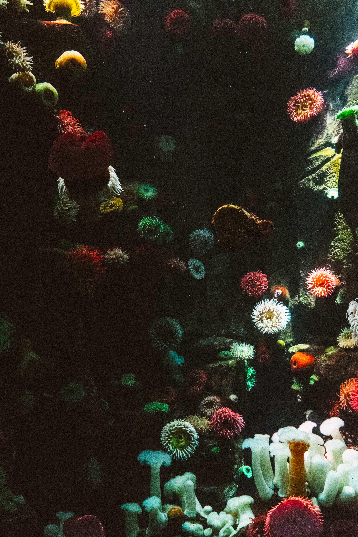 ornament coral decoration tank aquarium rock decor of realistic fish unique