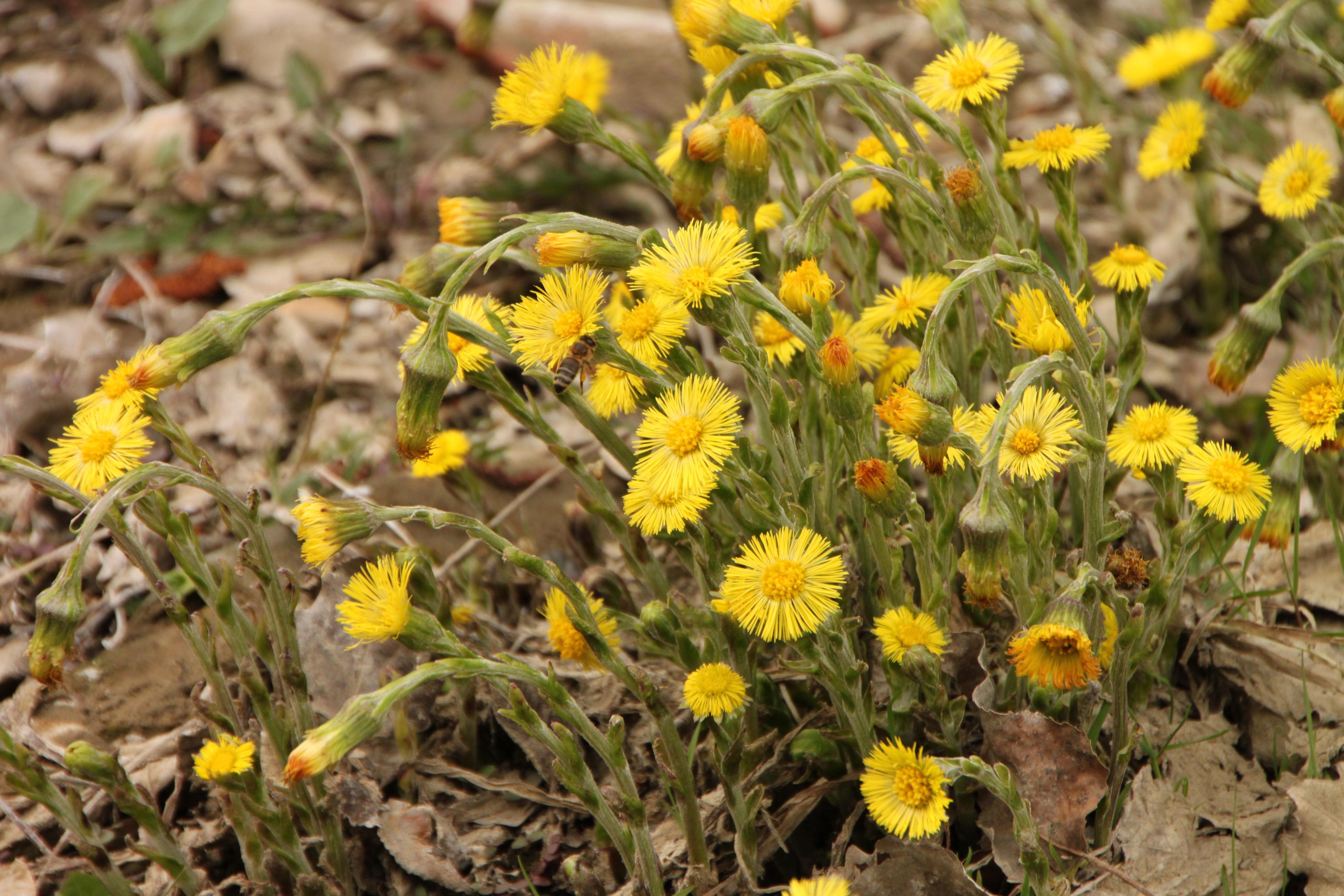 лечебные весенние травы фото это самый легкий