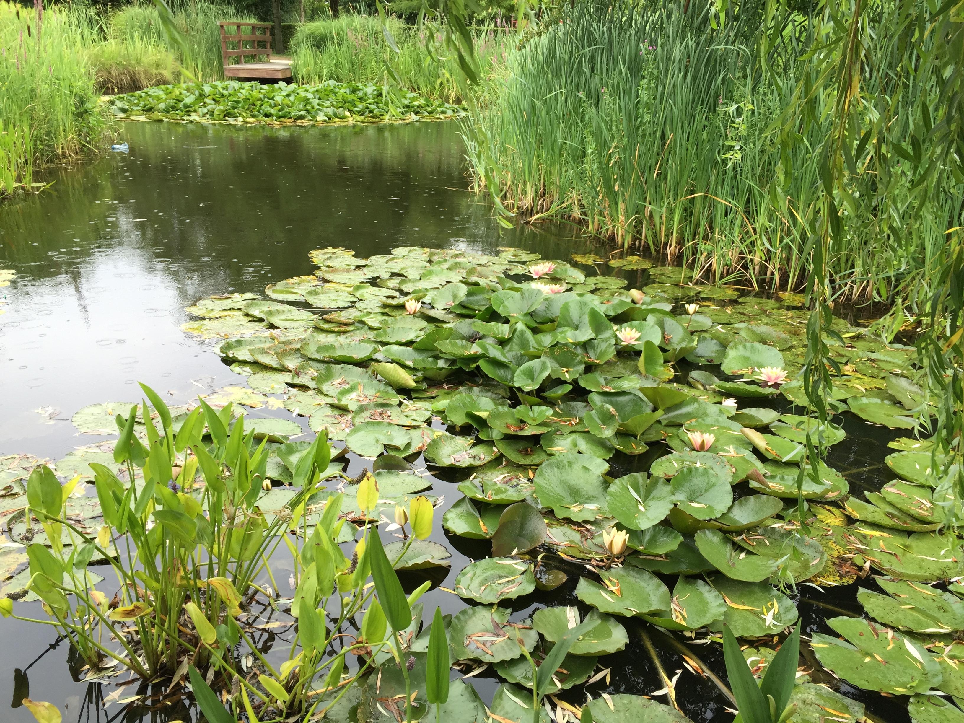 Fotos gratis agua hoja flor lago corriente verde for Imagenes de jardines con estanques
