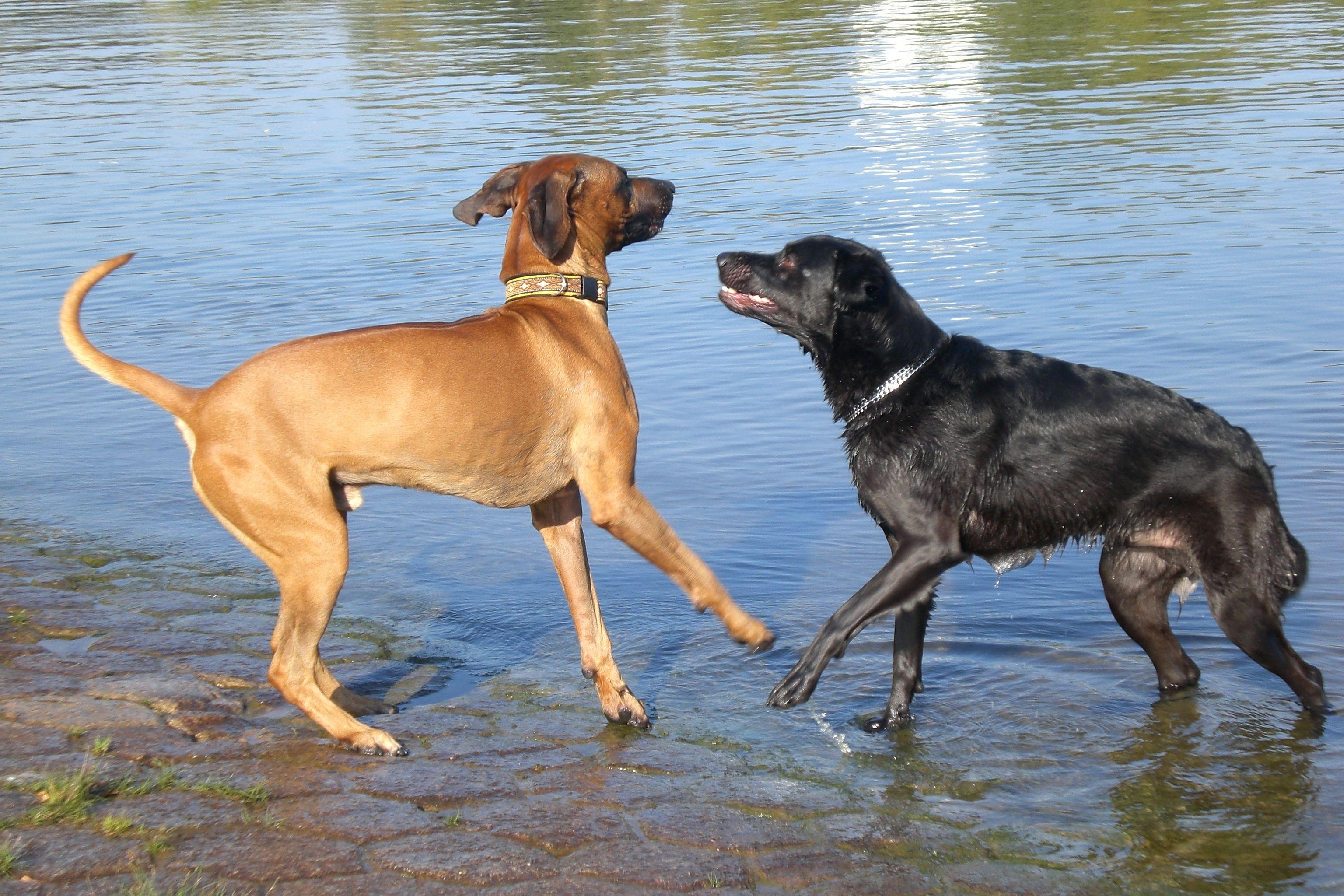 sporting dogs labrador retrievers birds of prey and - HD3072×2048