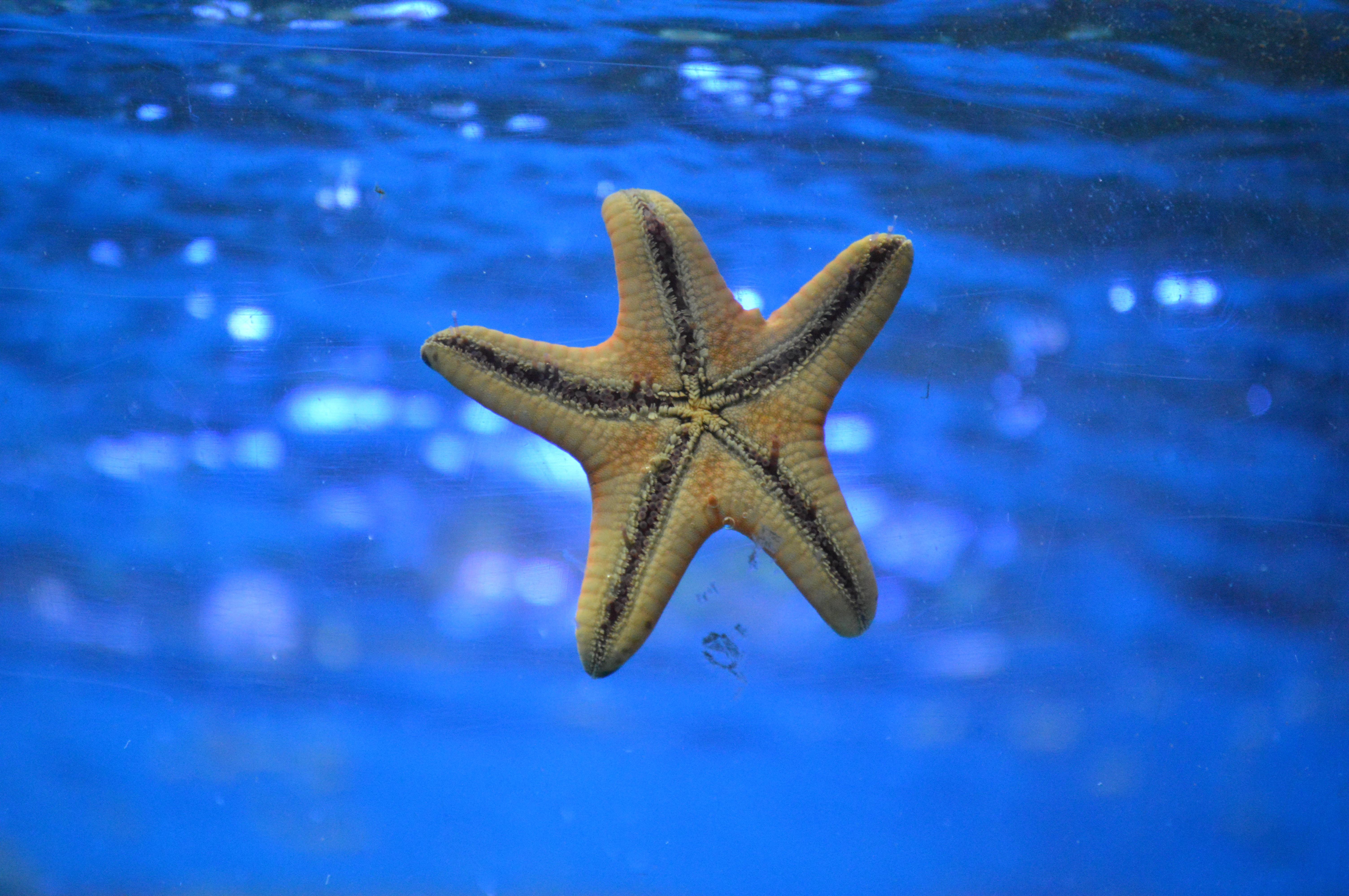 free images  water underwater blue starfish
