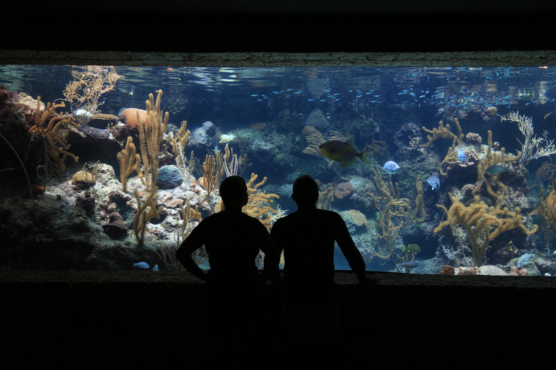 Fotoğraf Su Sualtı Biyoloji Balık Boyama Resif Akvaryum