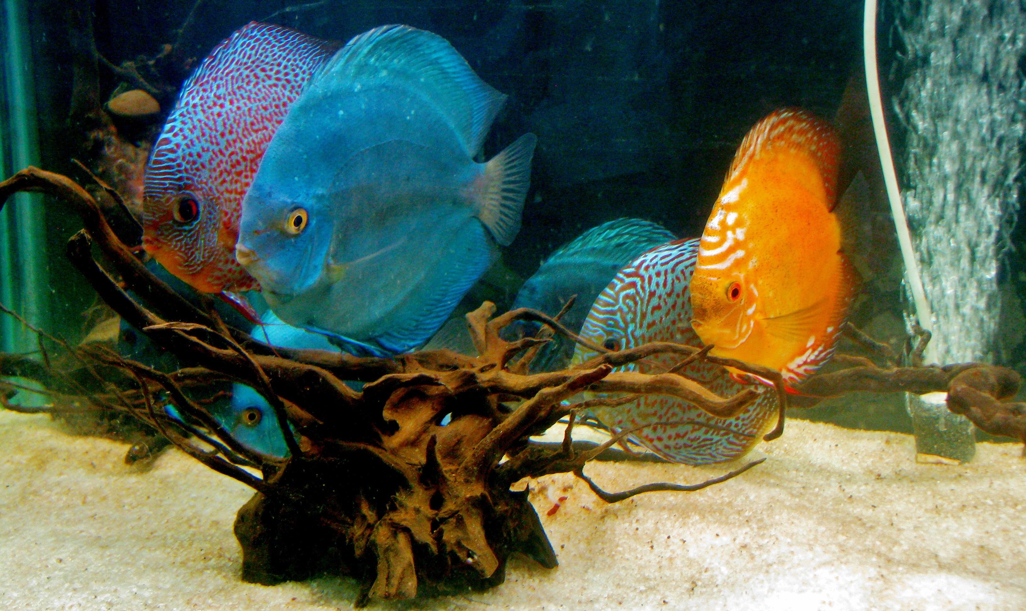 Картинки рыбок которые живут в аквариуме