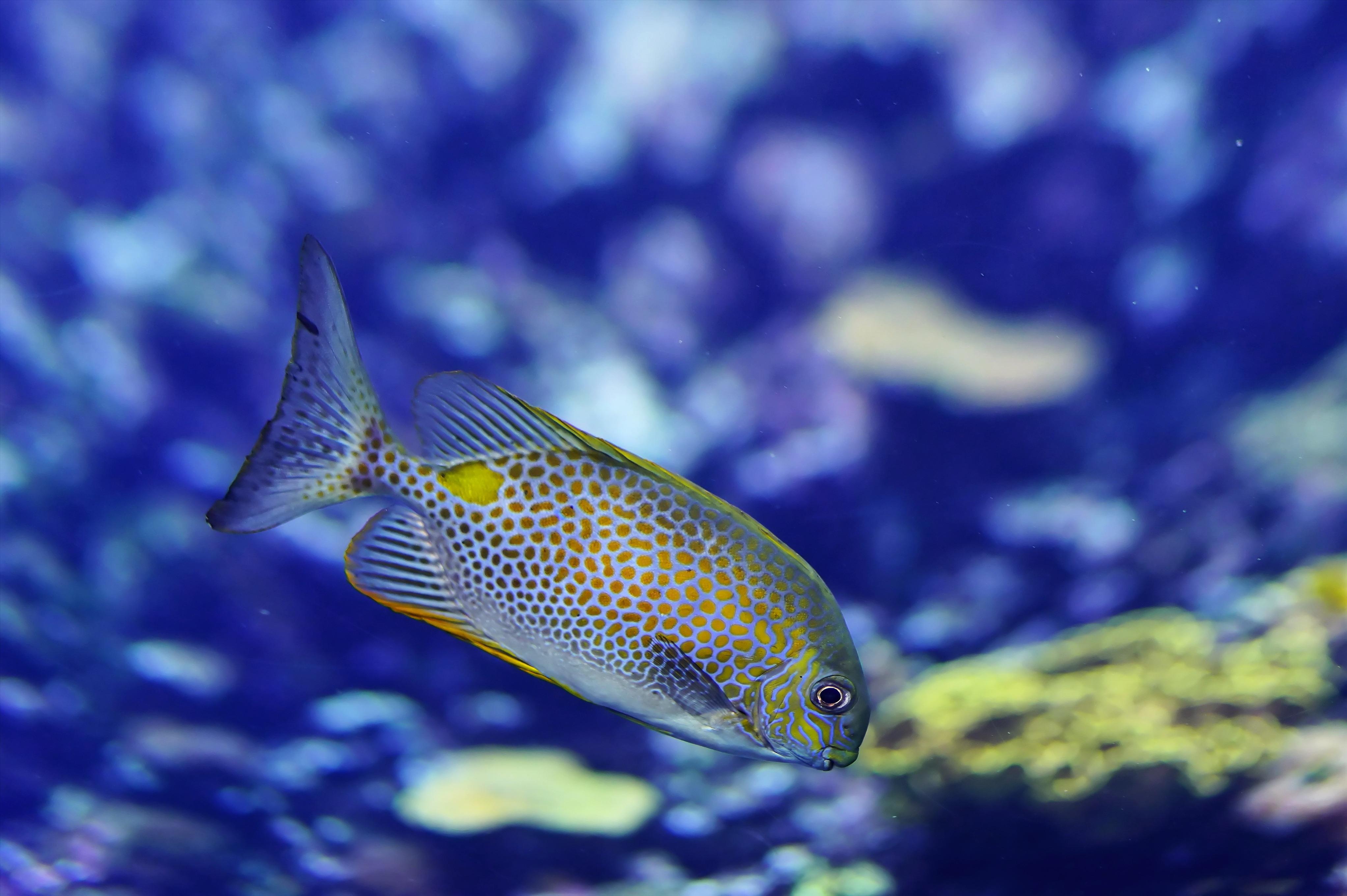 Images gratuites eau sous marin nager la biologie for Jouet aquarium poisson