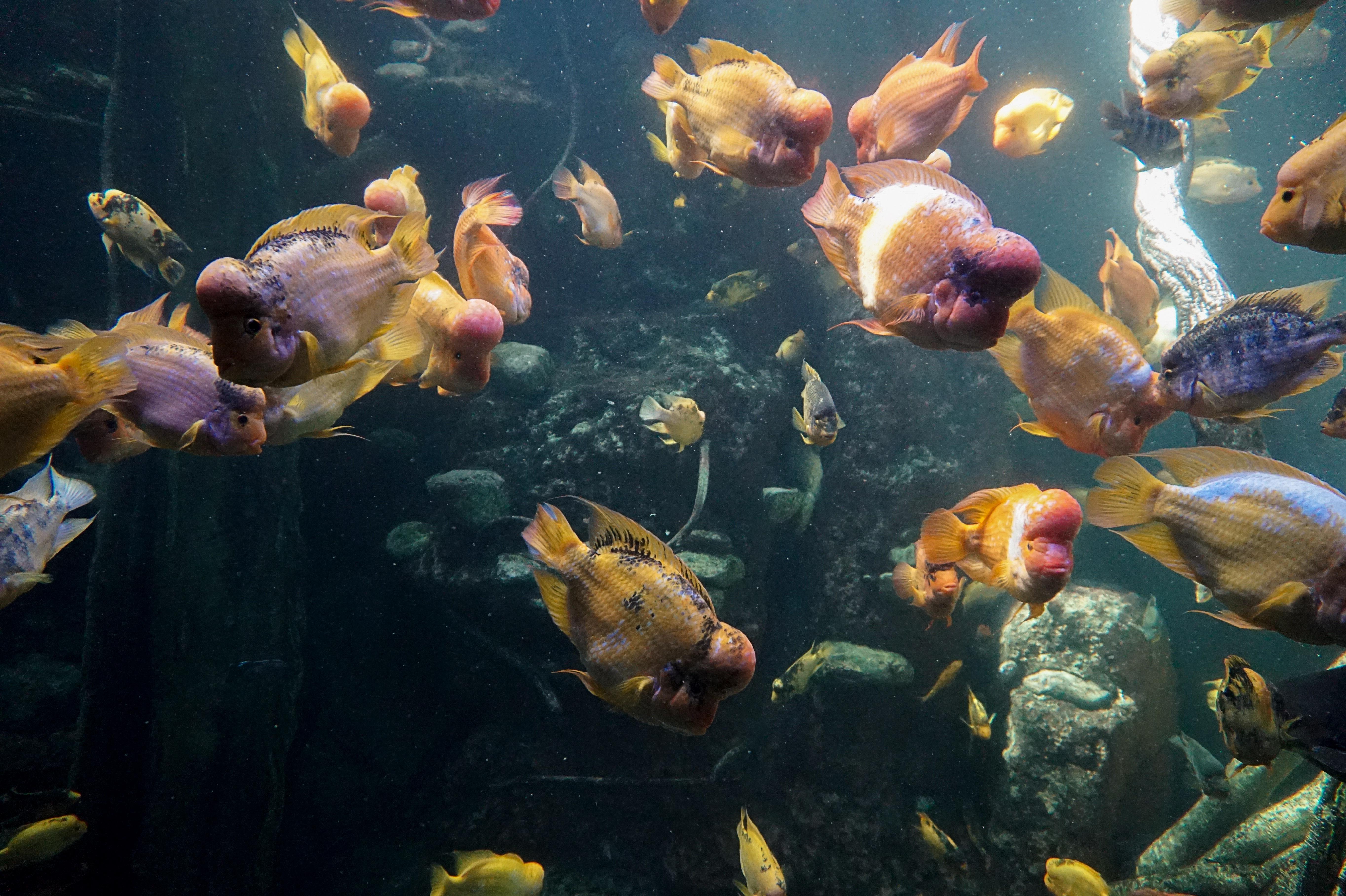 приусадебном картинка рыбы плавают в воде там было около