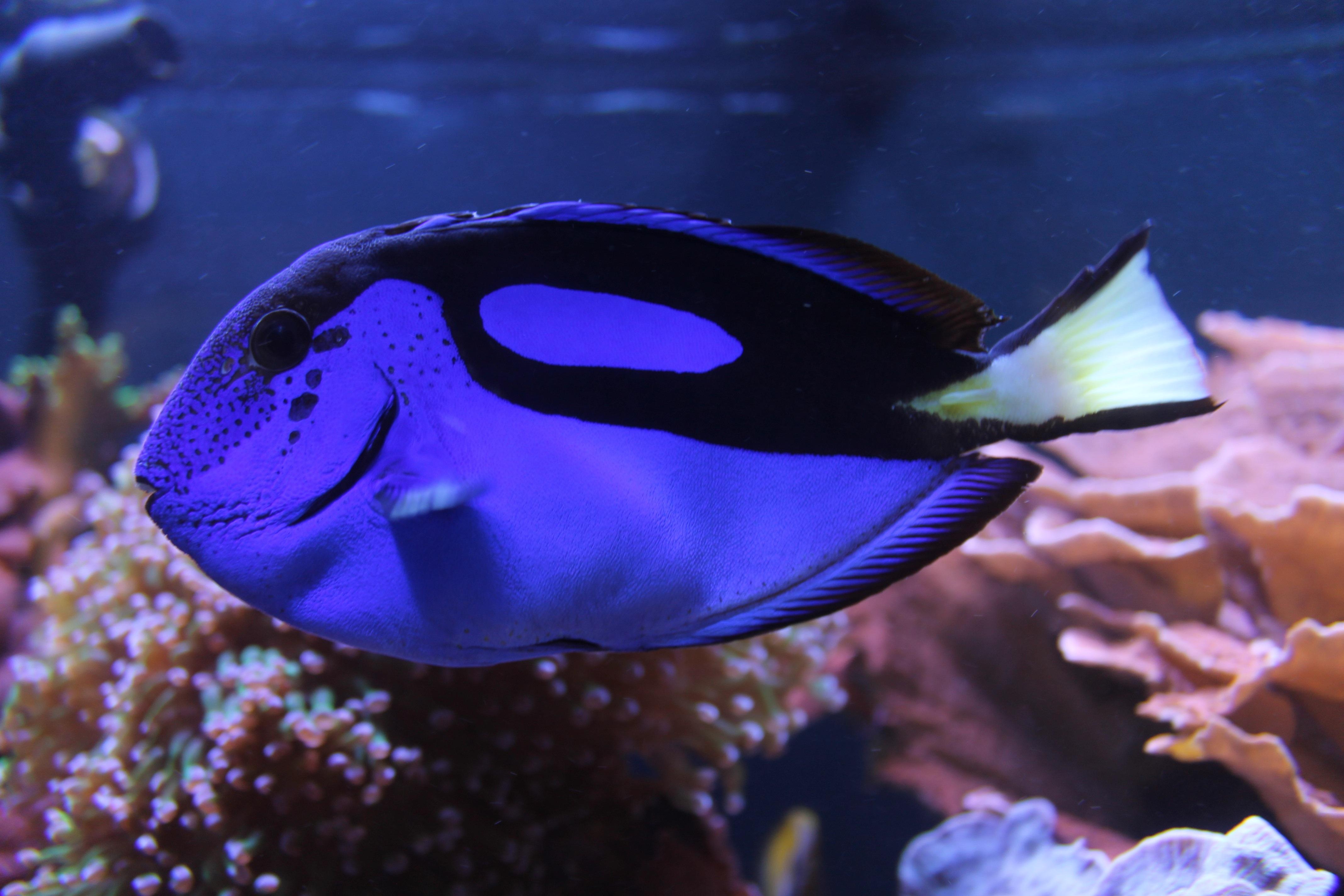 Akvaariokalat Kuvina