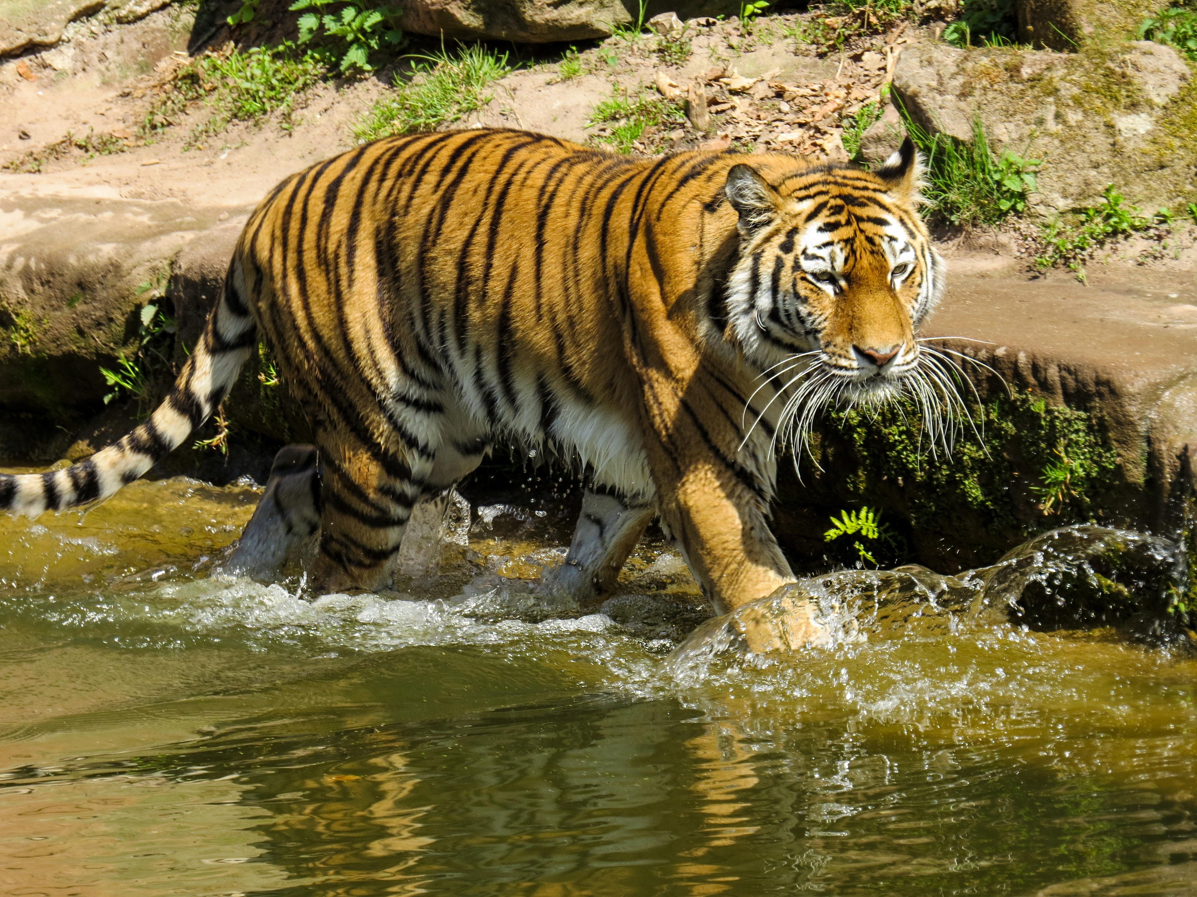 Free Images Water Wildlife Zoo Jungle Predator