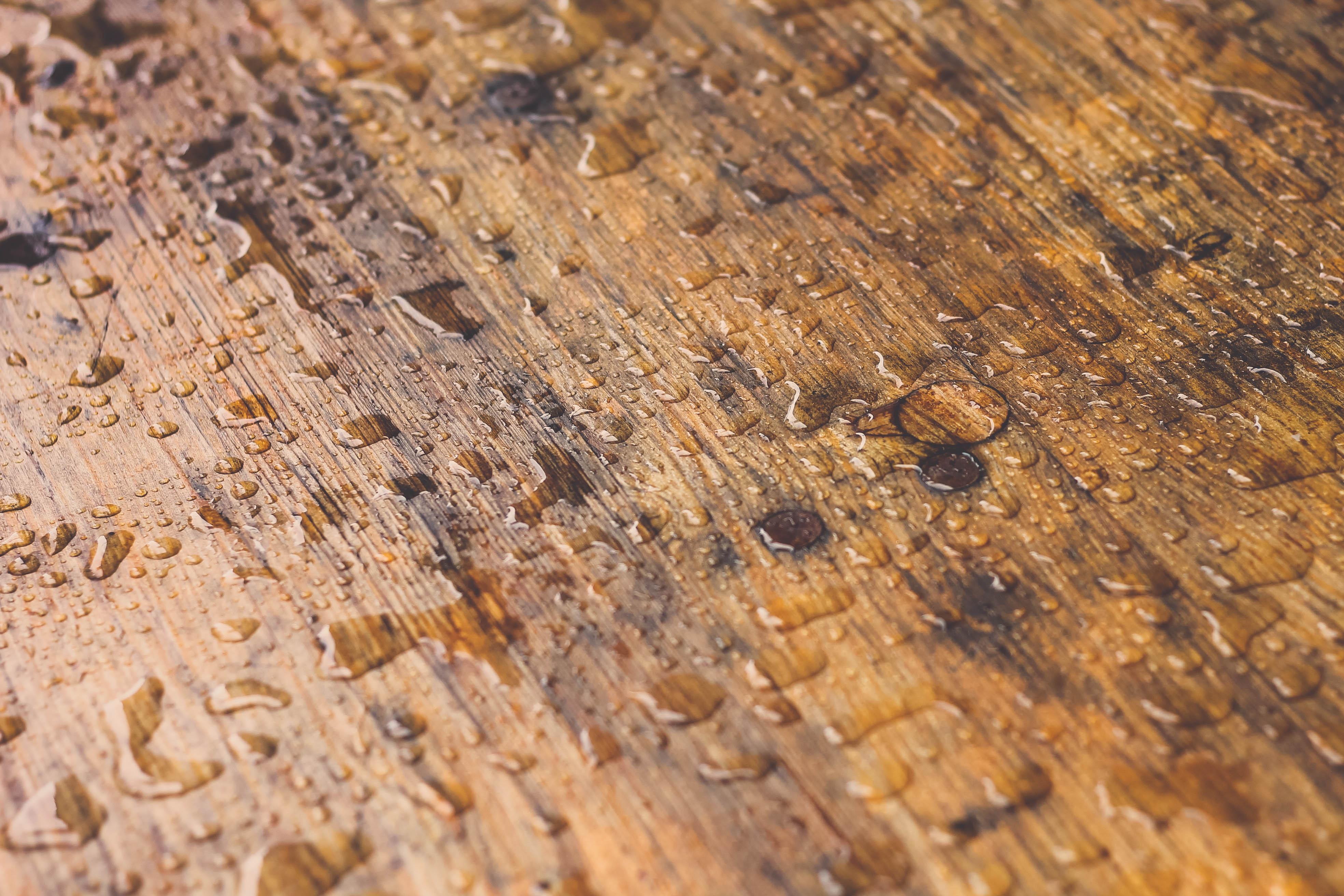 Water Wood Texture Rain Leaf Floor Wet Trunk Soil Lumber Hardwood Raindrops Flooring Laminate