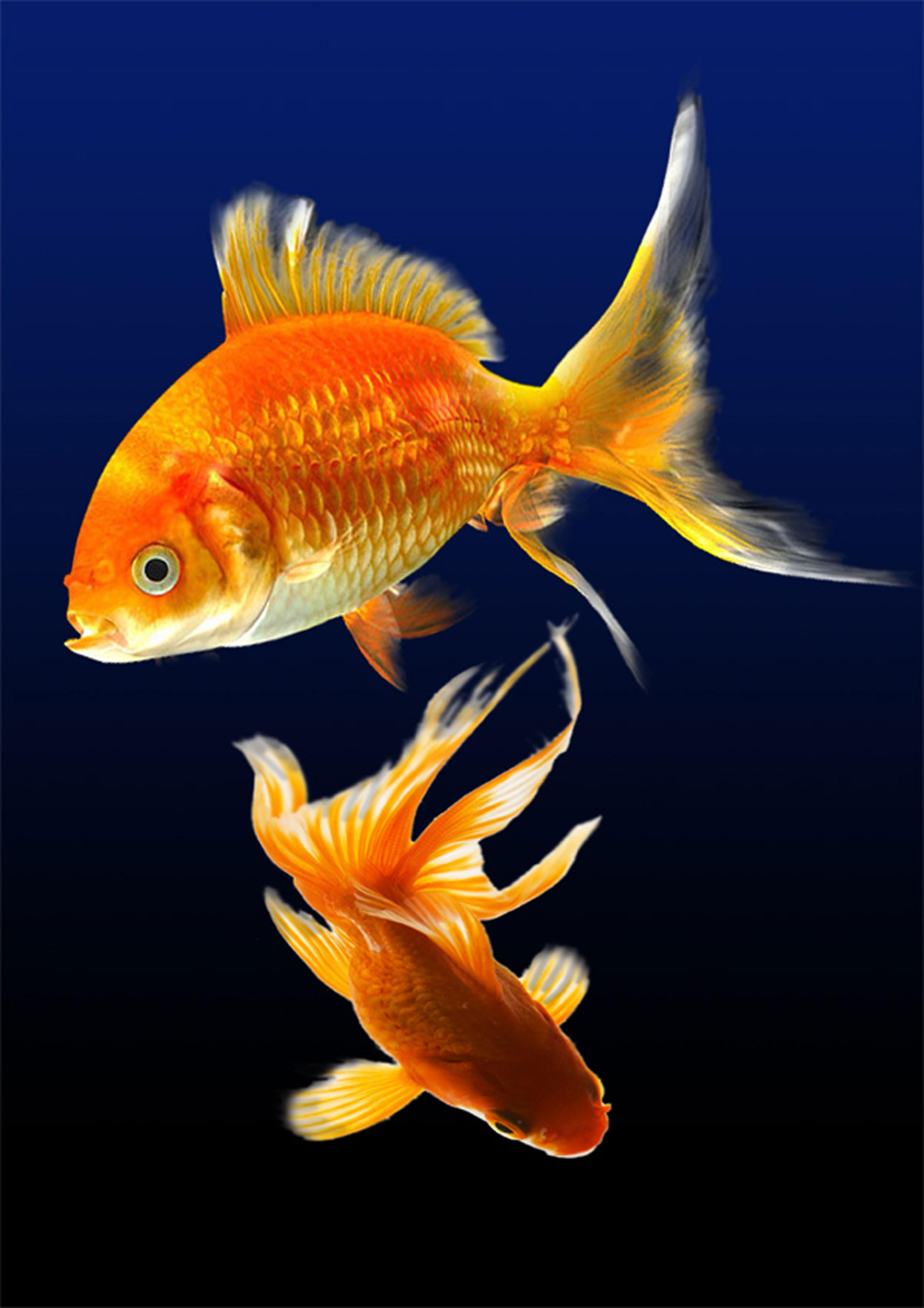 аквариумные рыбки картинки на телефон мест захоронений
