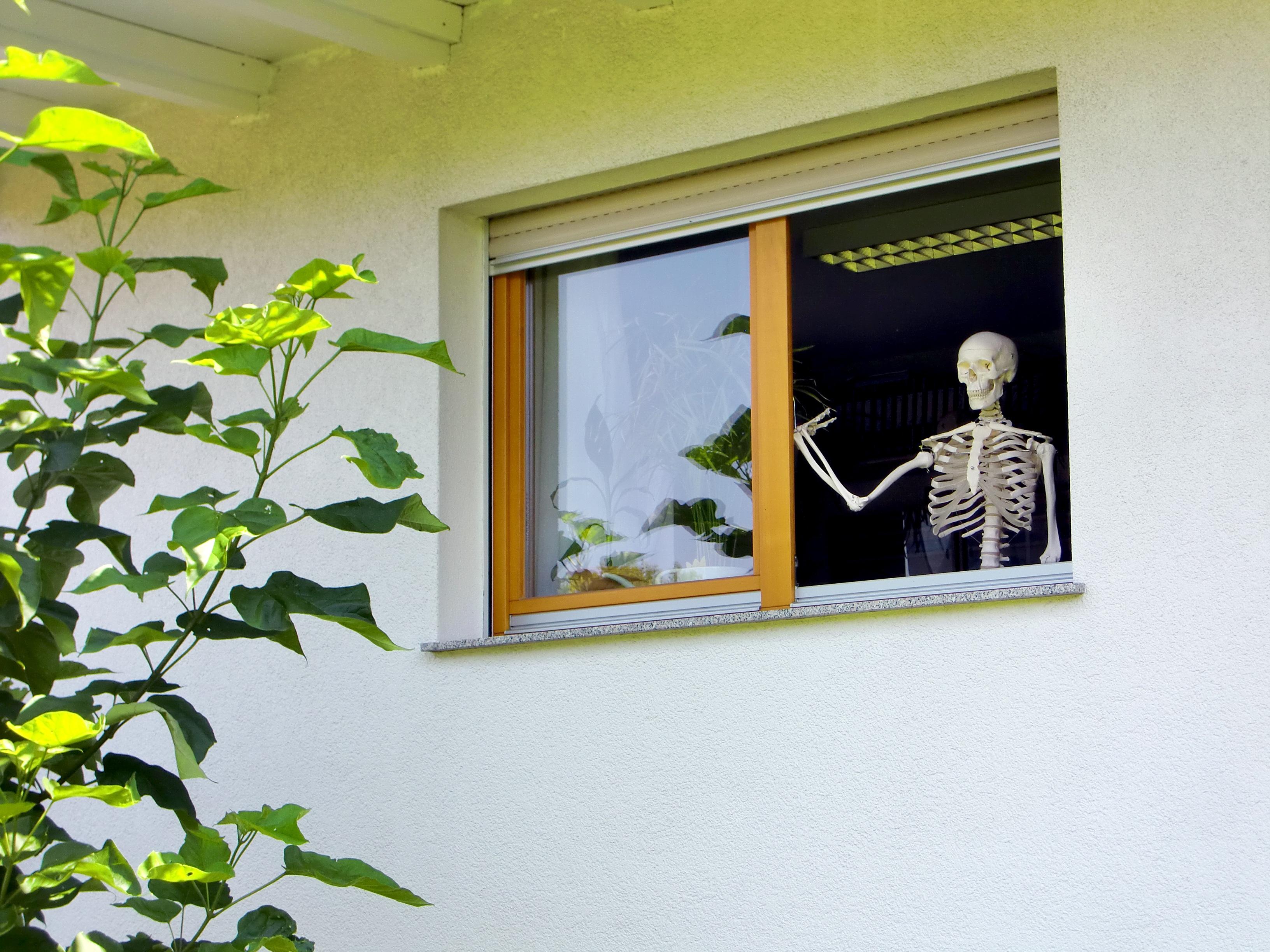 Fotos gratis : ola, pared, mamífero, muerte, diseño de interiores ...