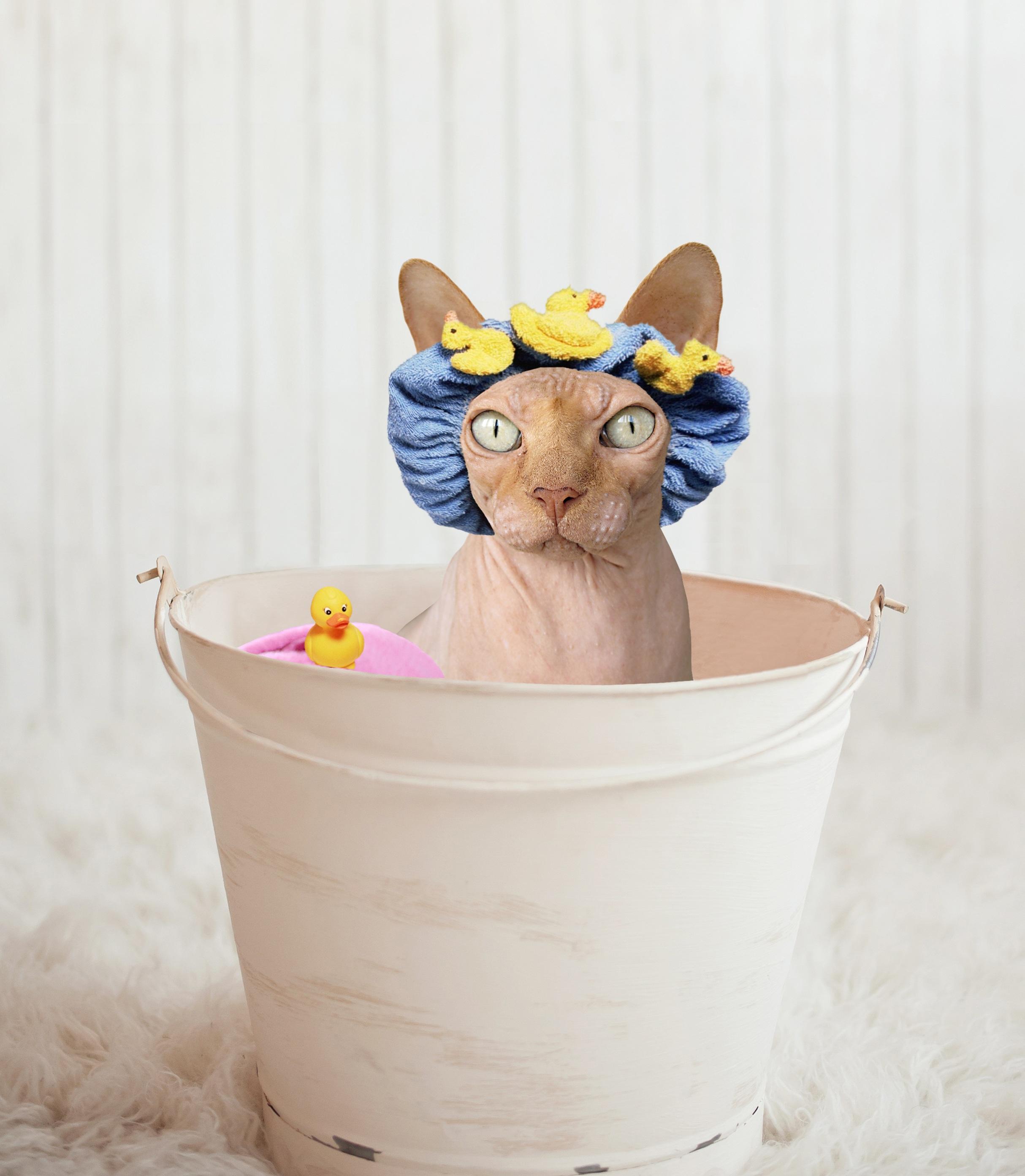 Gambar Basah Imut Potret Anak Kucing Licik Ember Bak