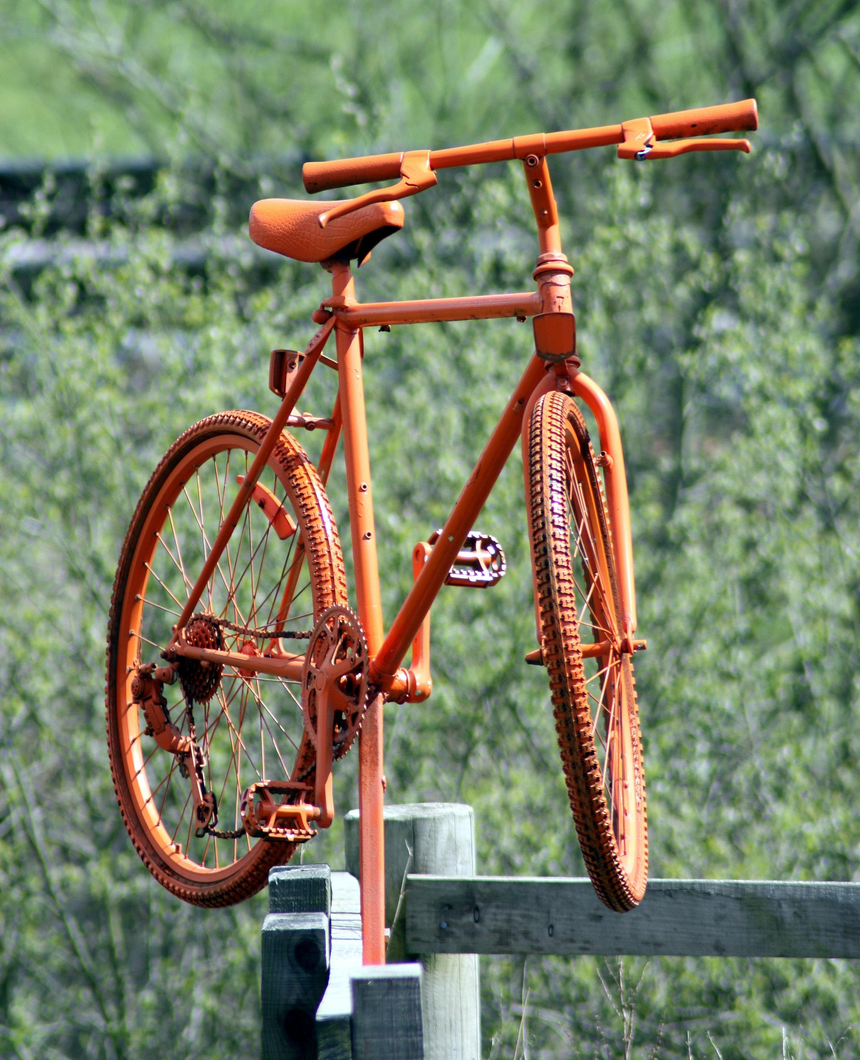 Kostenlose foto : Rad, Laub, Orange, Fahrzeug, Farbe, Grün ...