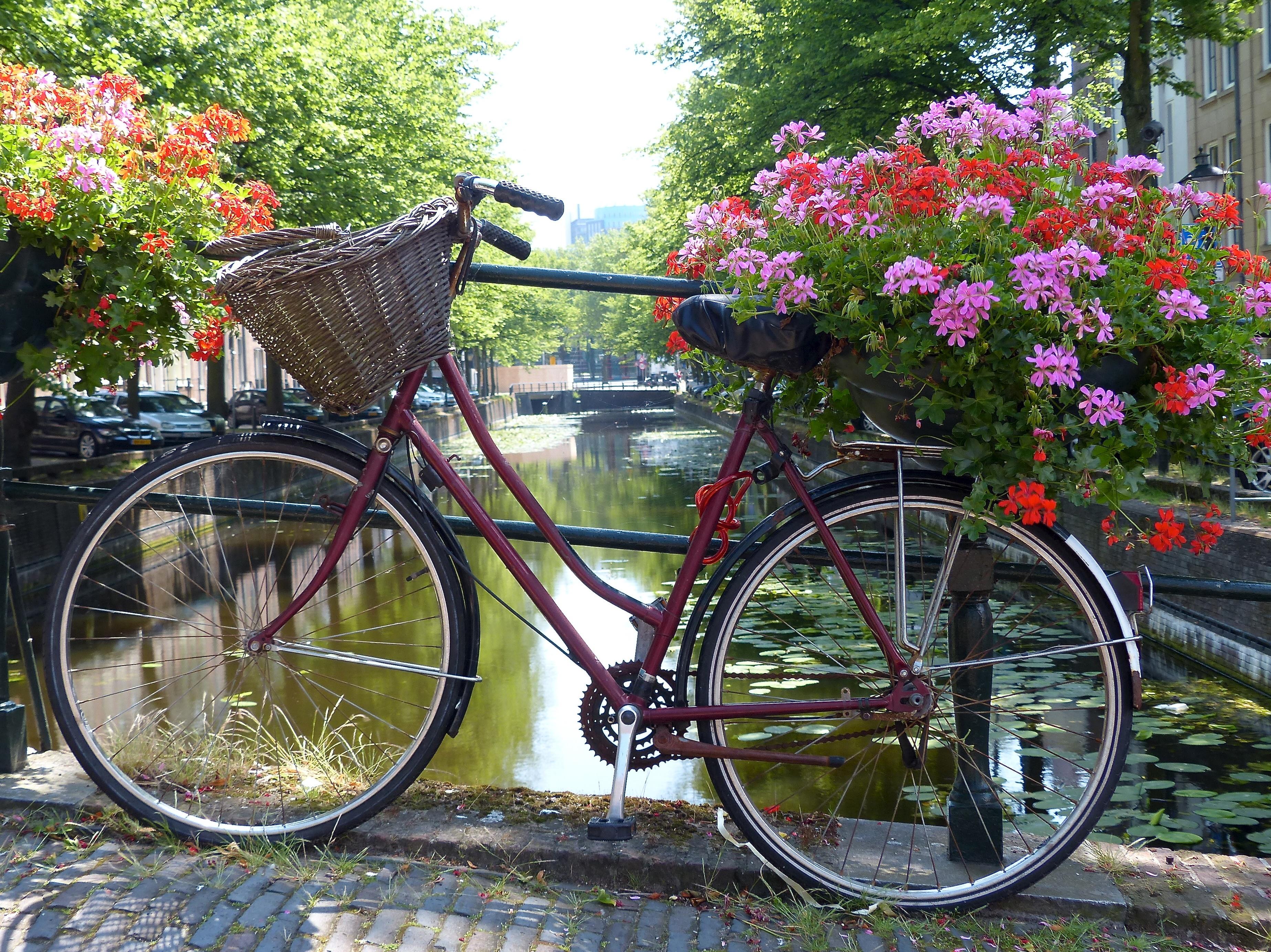 Фото цветов с велосипедом