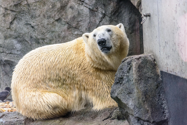 bjørnen bjørn i zoo