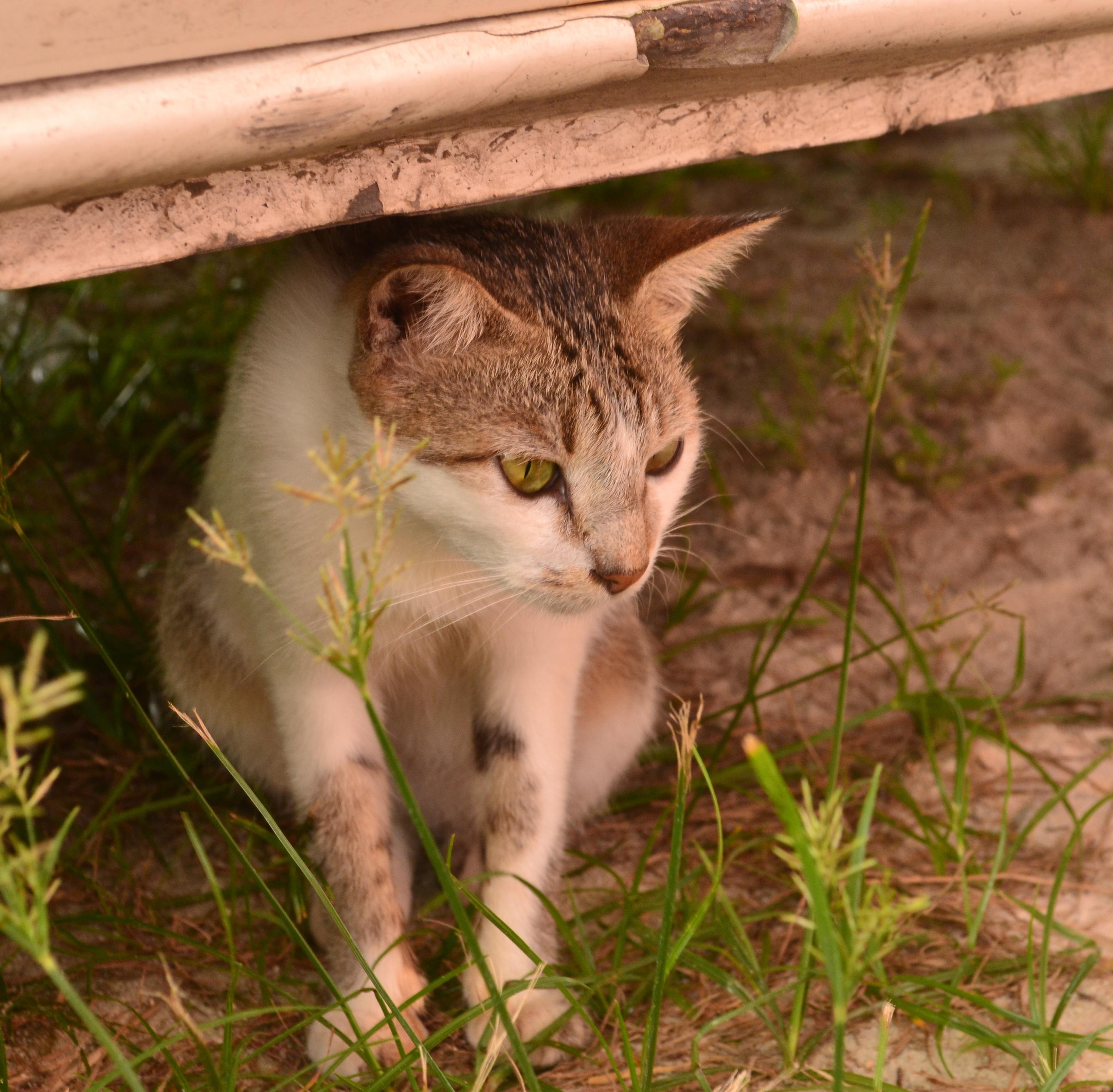 Tmavé chlpaté mačička pics