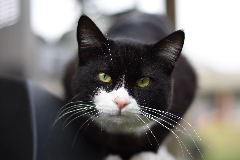 www čierne vlasy mačička obrázky veľkých mužov