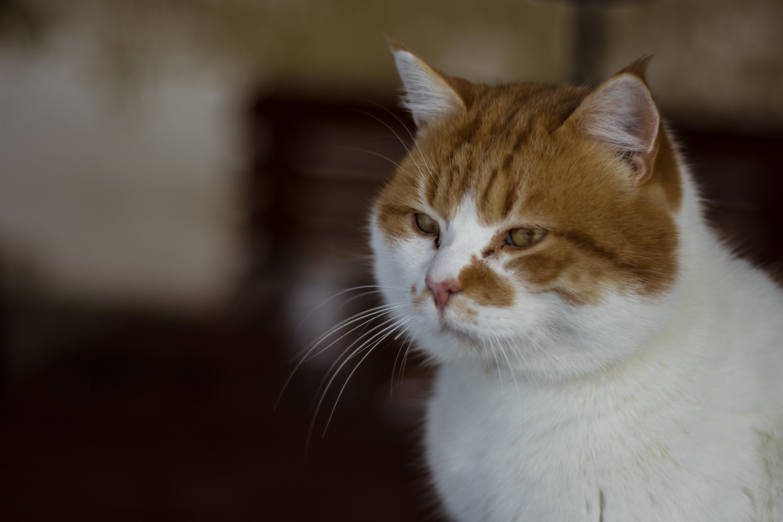roztomilý bez vlasov mačička šťavnaté Teen mačička