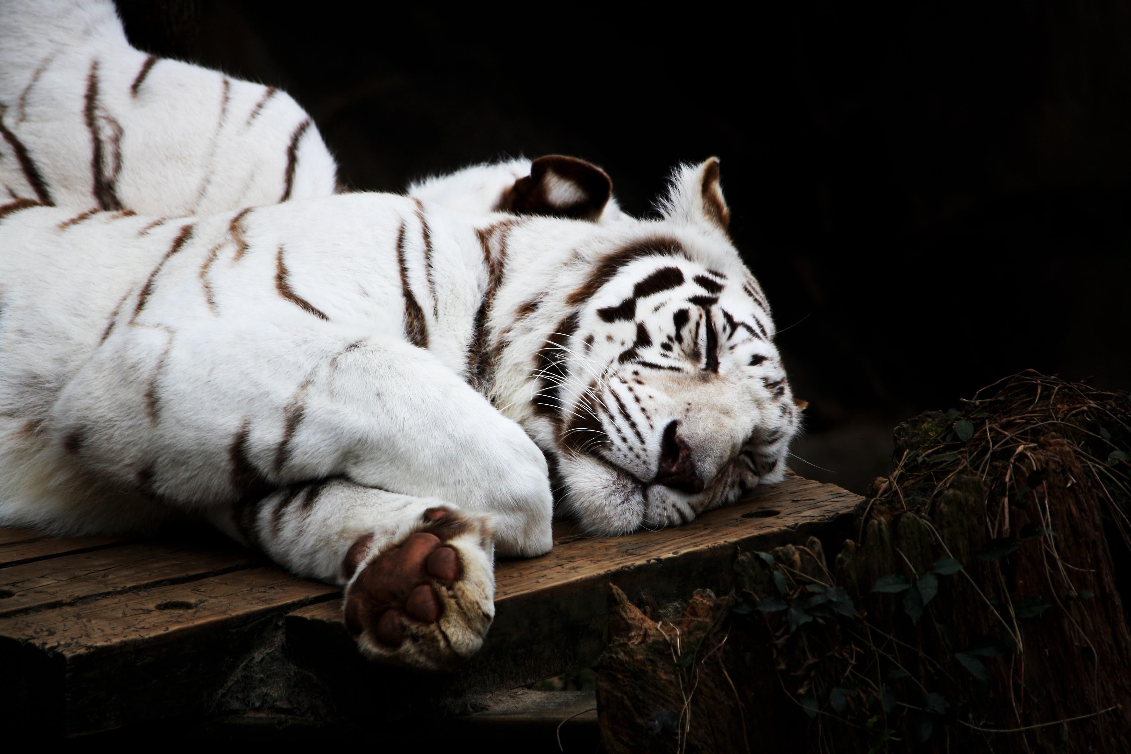 Gambar Putih Hewan Imut Margasatwa Kebun Binatang Binatang