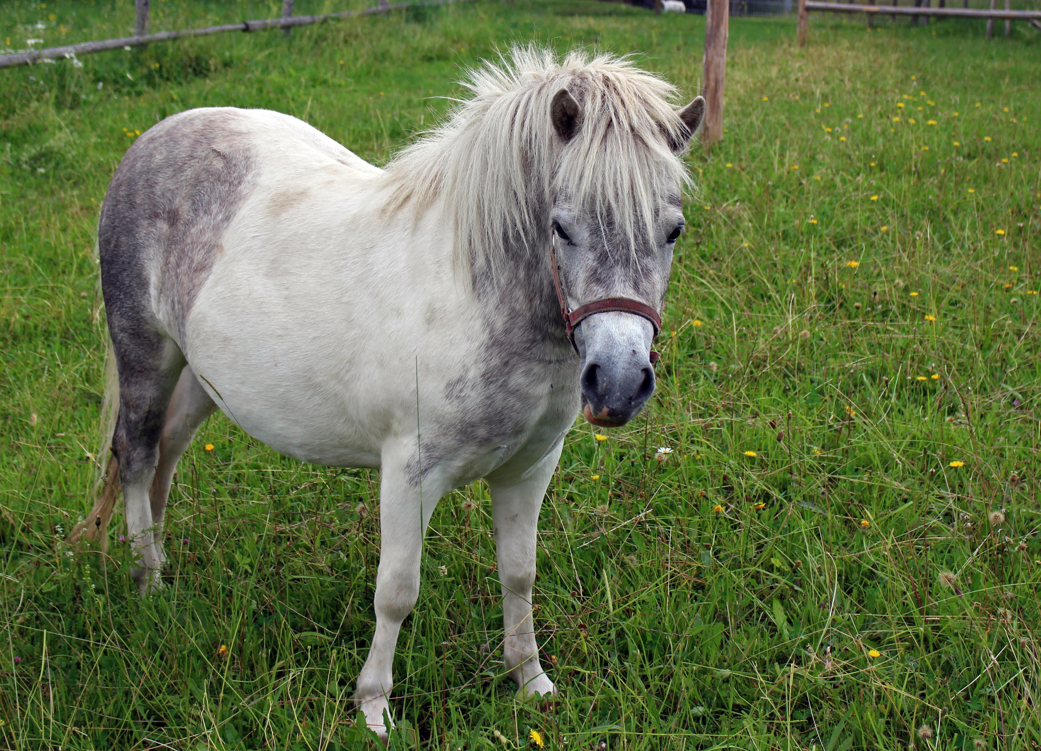 Afbeeldingen Paarden En Ponys