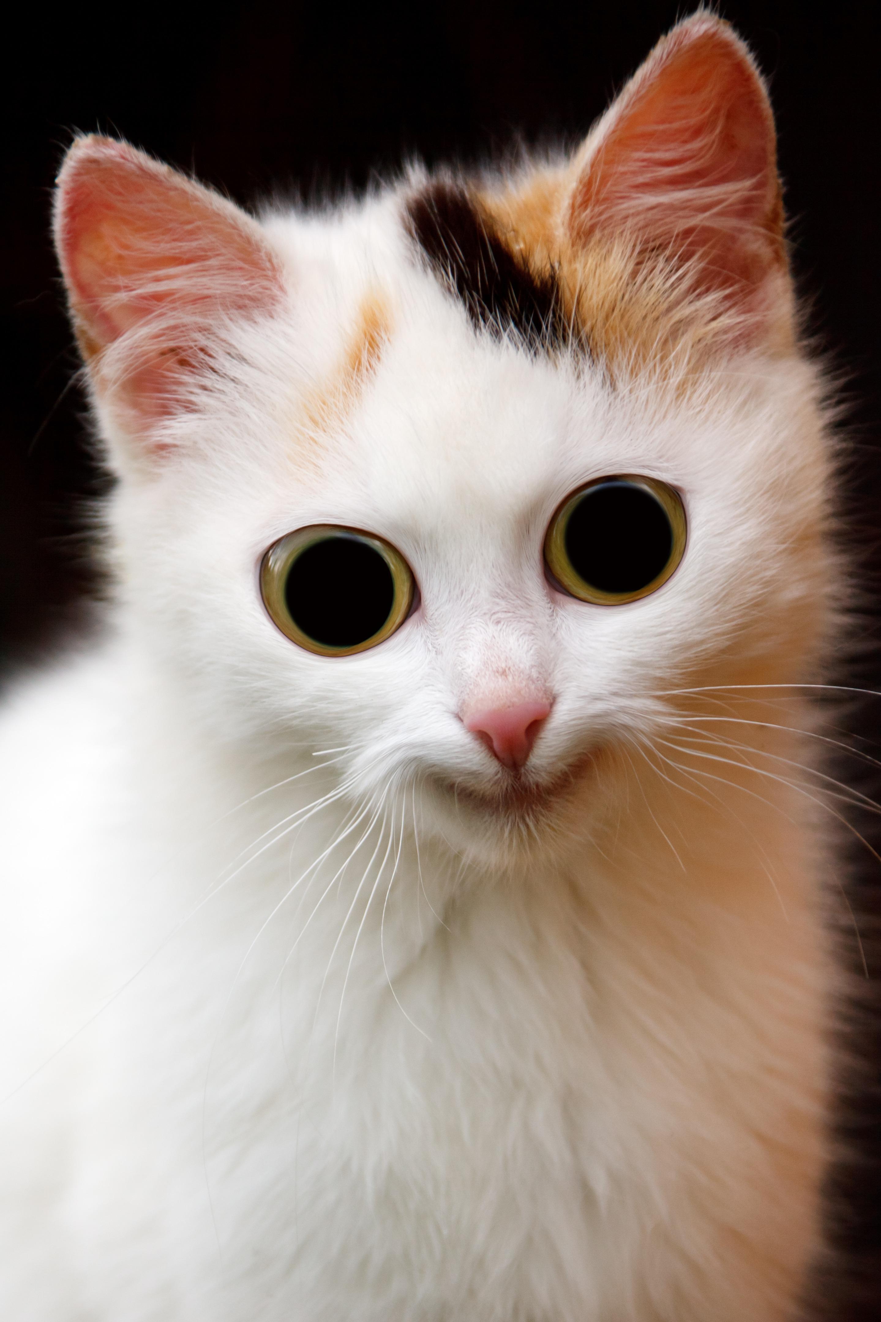 Download 95+  Gambar Kucing Aneh Paling Baru